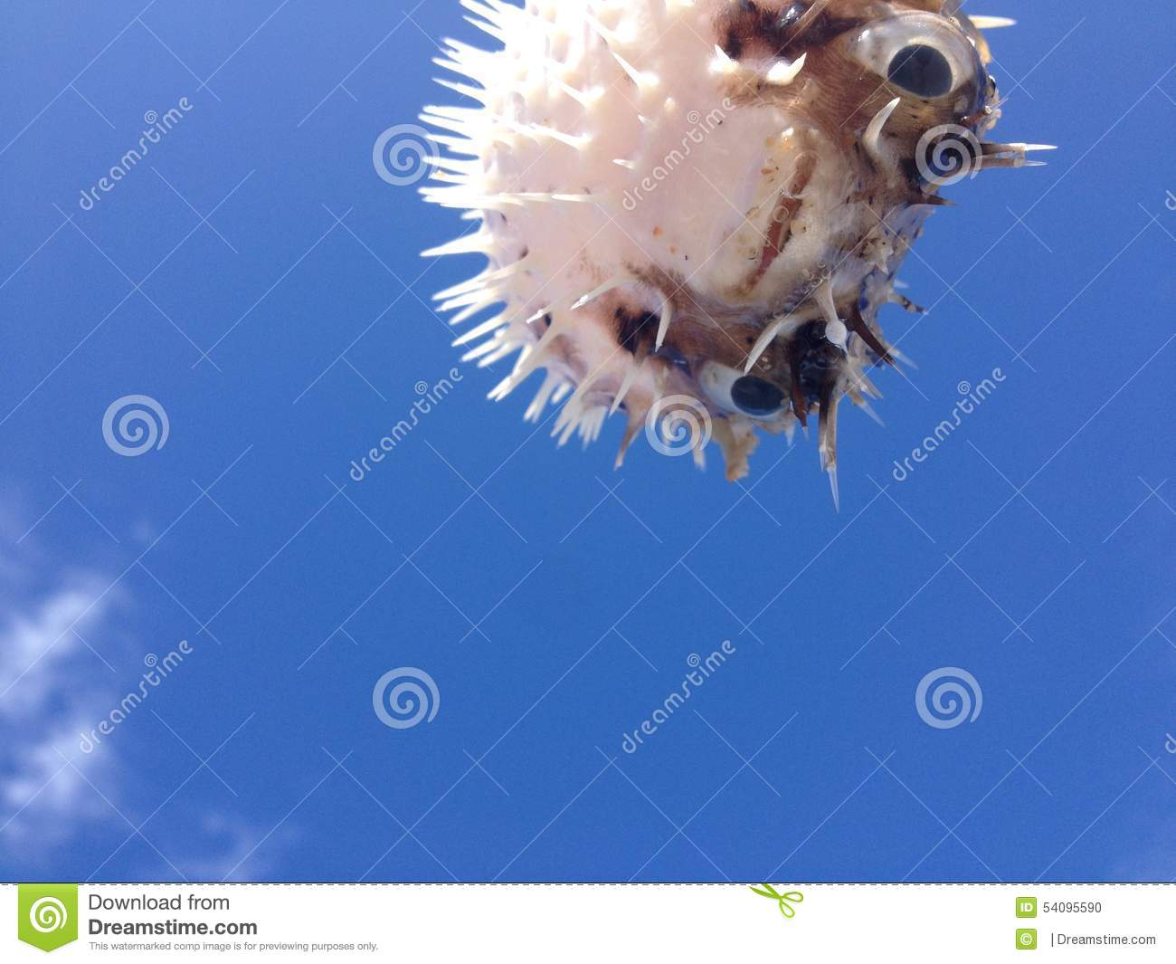 Puffer fish in mexico stock photo image 54095590 for Fish in mexico