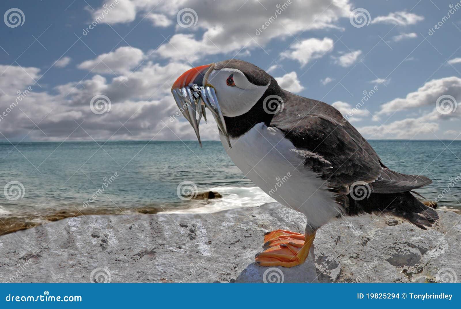 Argilla nera del Mar Morto di un pacco di faccia