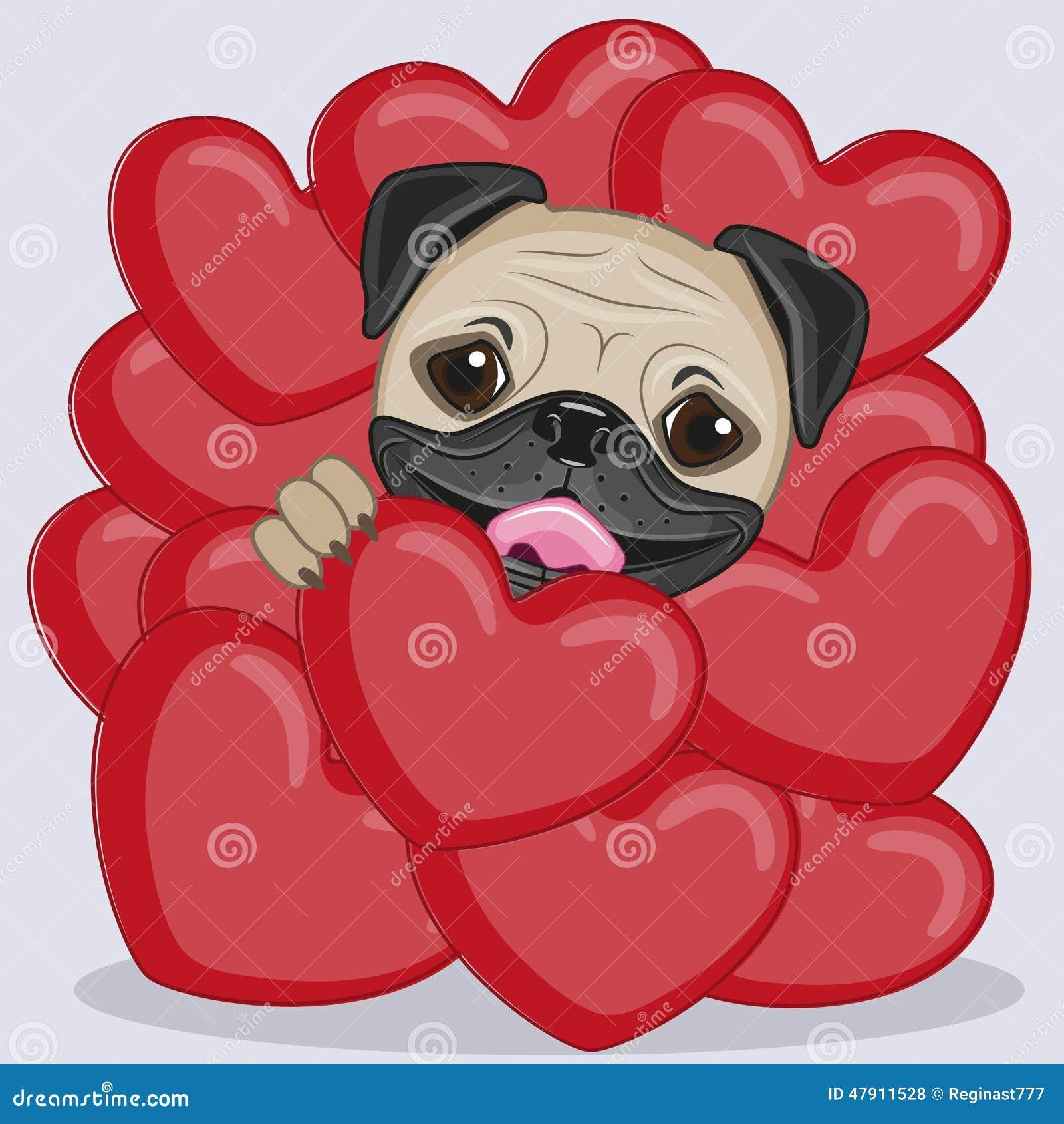 Valentine Pug Photos Images Pictures 171 Images – Pug Valentine Cards