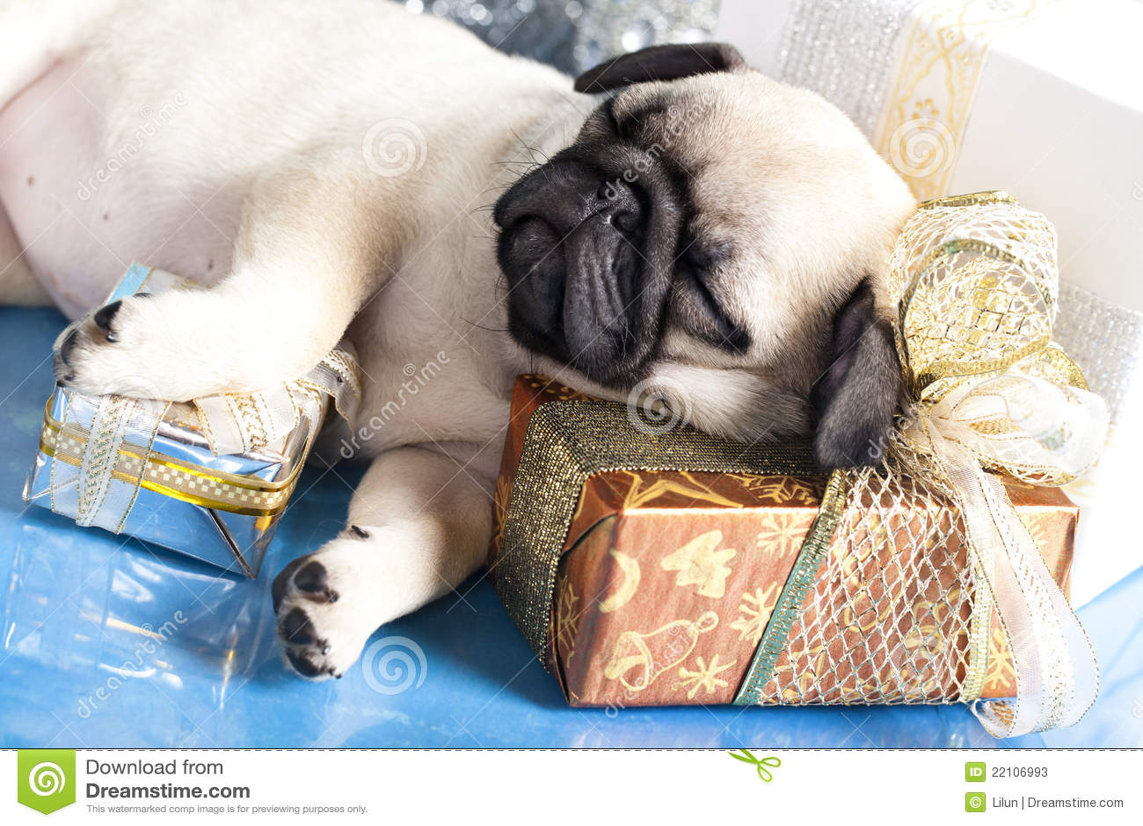 E Pug Gratis Pug E Presentes Do Fil...