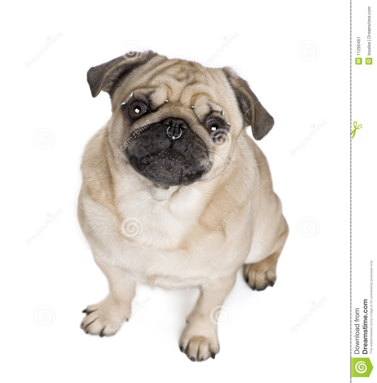 dog looking up clip art