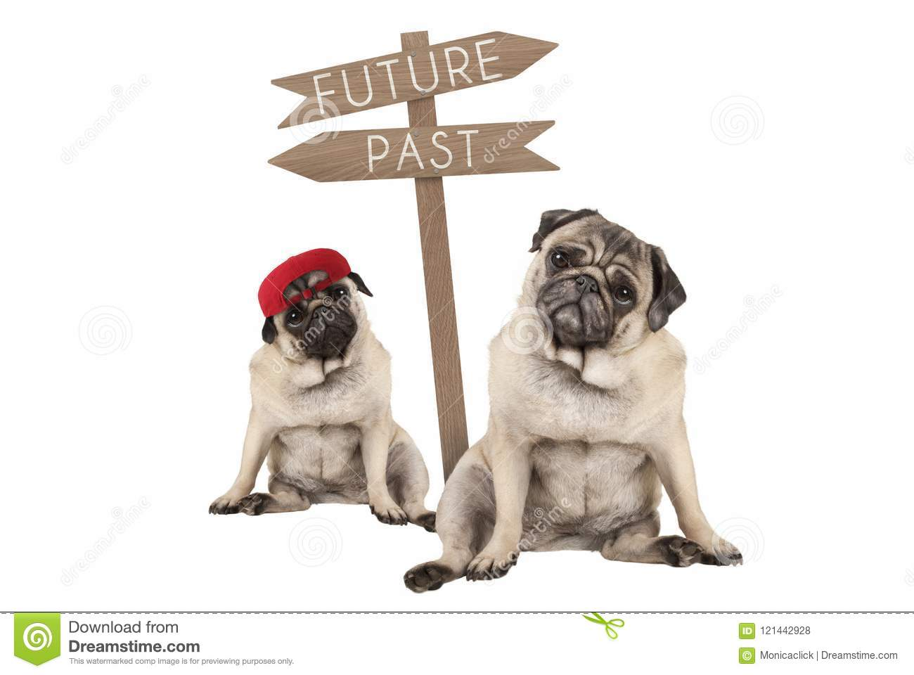 Pug puppy dog and aged animal sitting next to signpost with text past and future