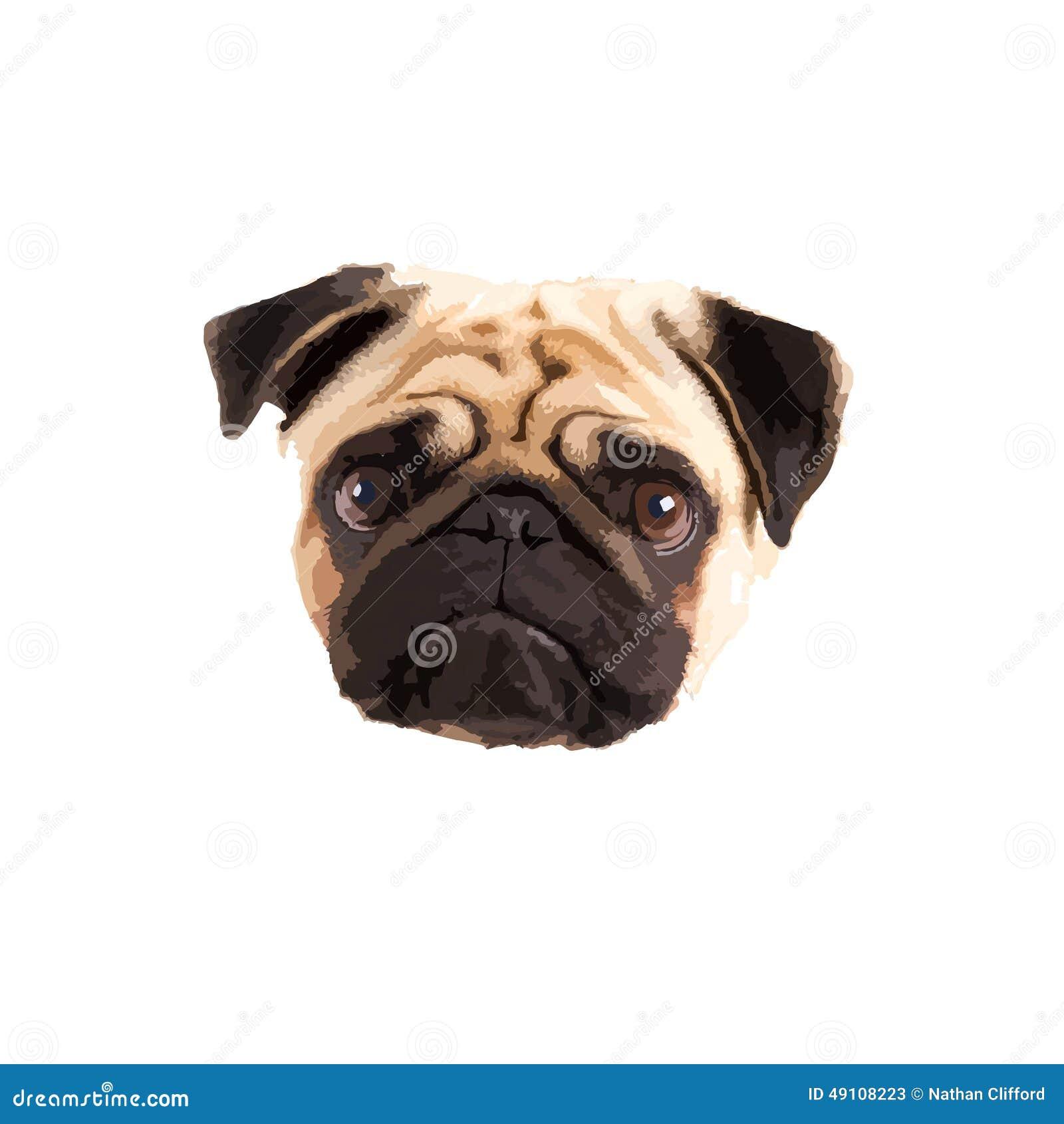 Pug Vector Stock Vector - Image: 49108223