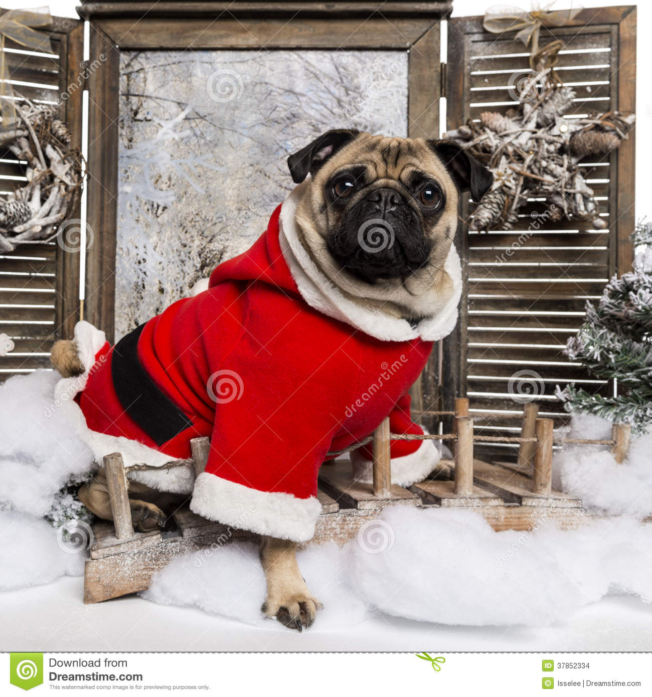 Pug wearing a christmas suit sitting in a winter scenery