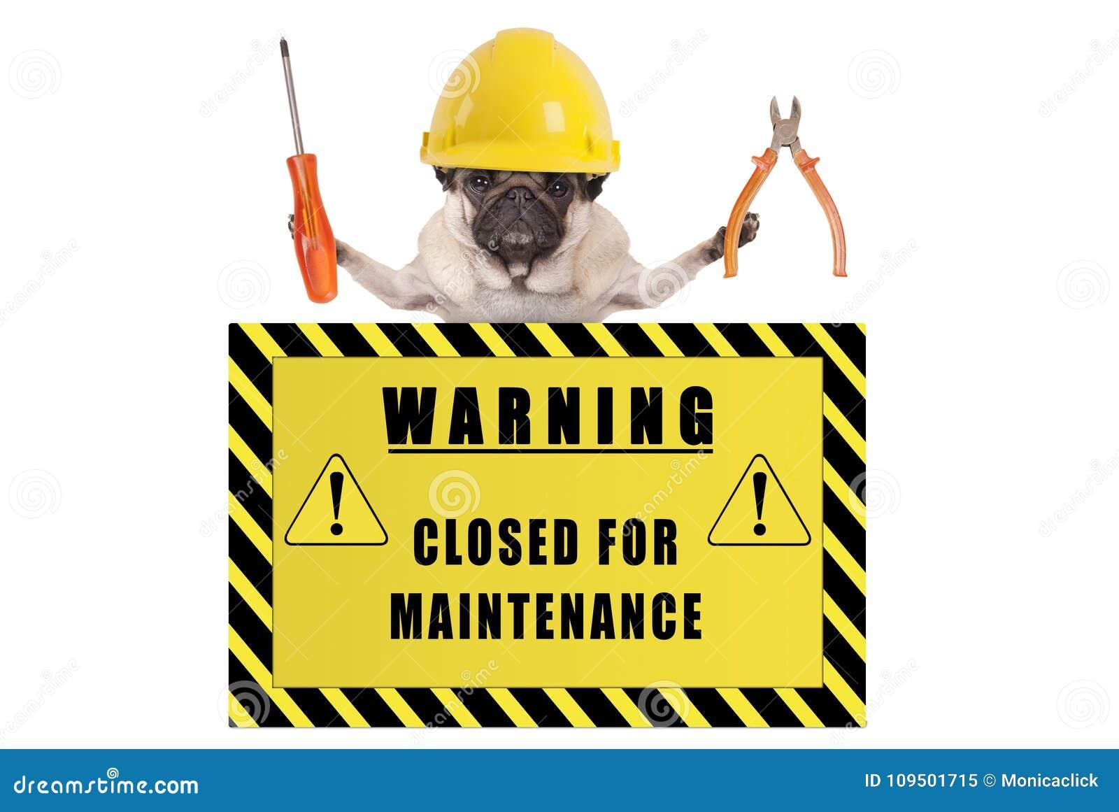 Pughund mit dem Erbauerschutzhelm, der Zangen und Schraubenzieher mit dem gelben Warnzeichensagen hält, schloss für Wartung