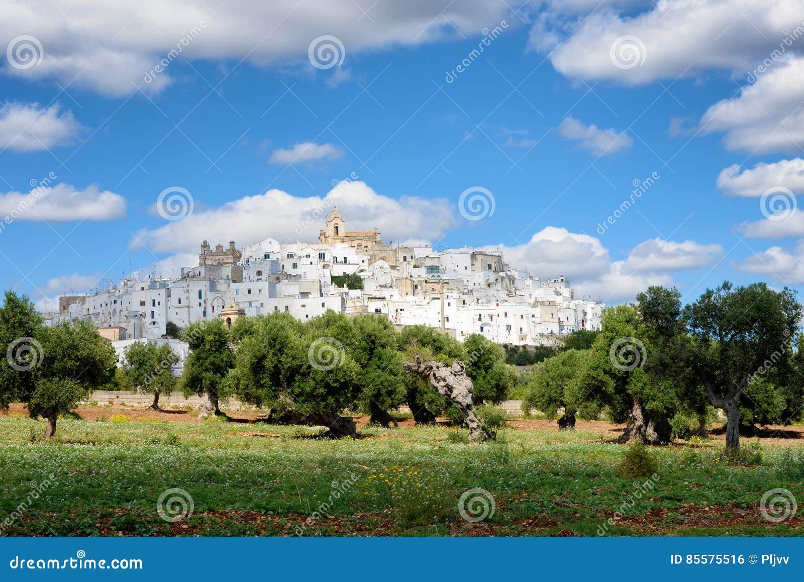 Puglia white city Ostuni with olive trees