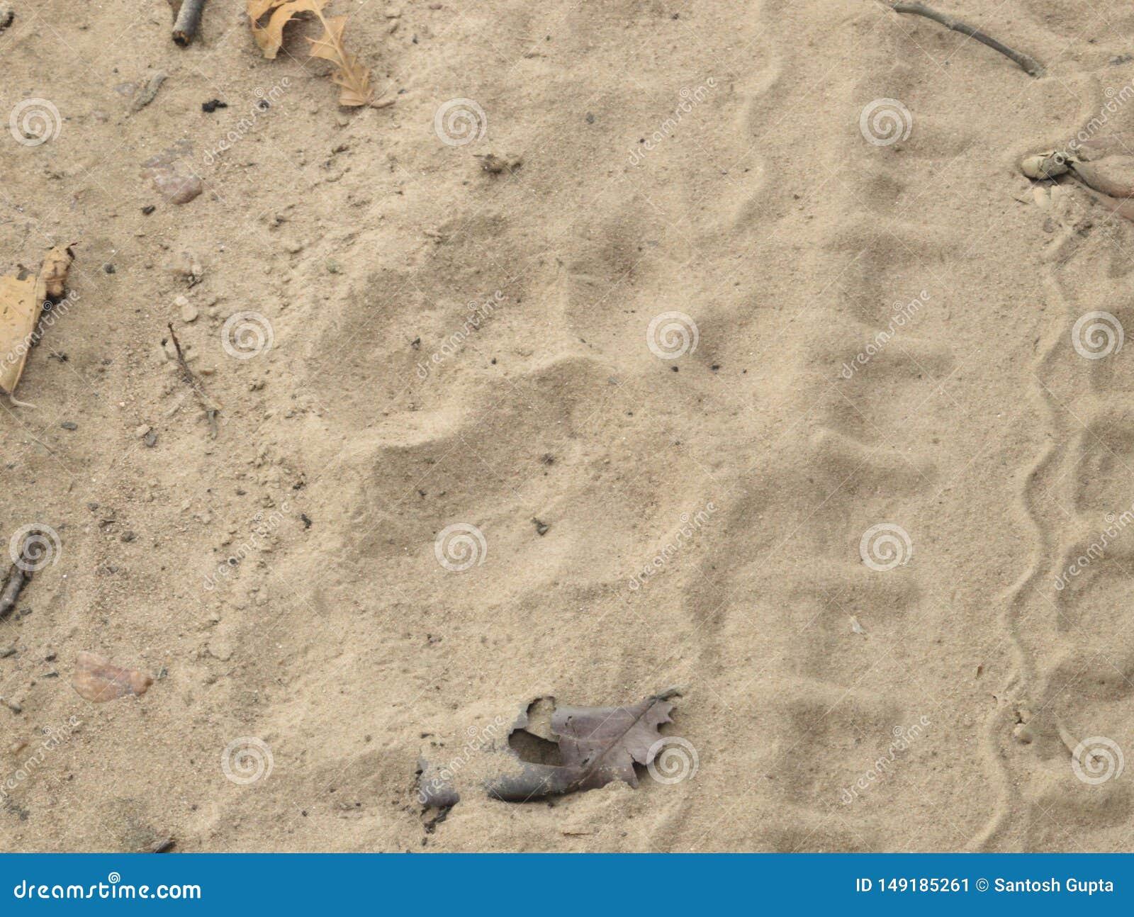 Pugmark feamle tygrys