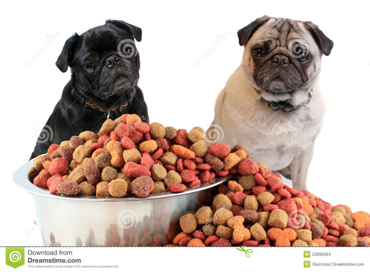 Pugs And Dog Food Stock Photo Image Of Overflowing