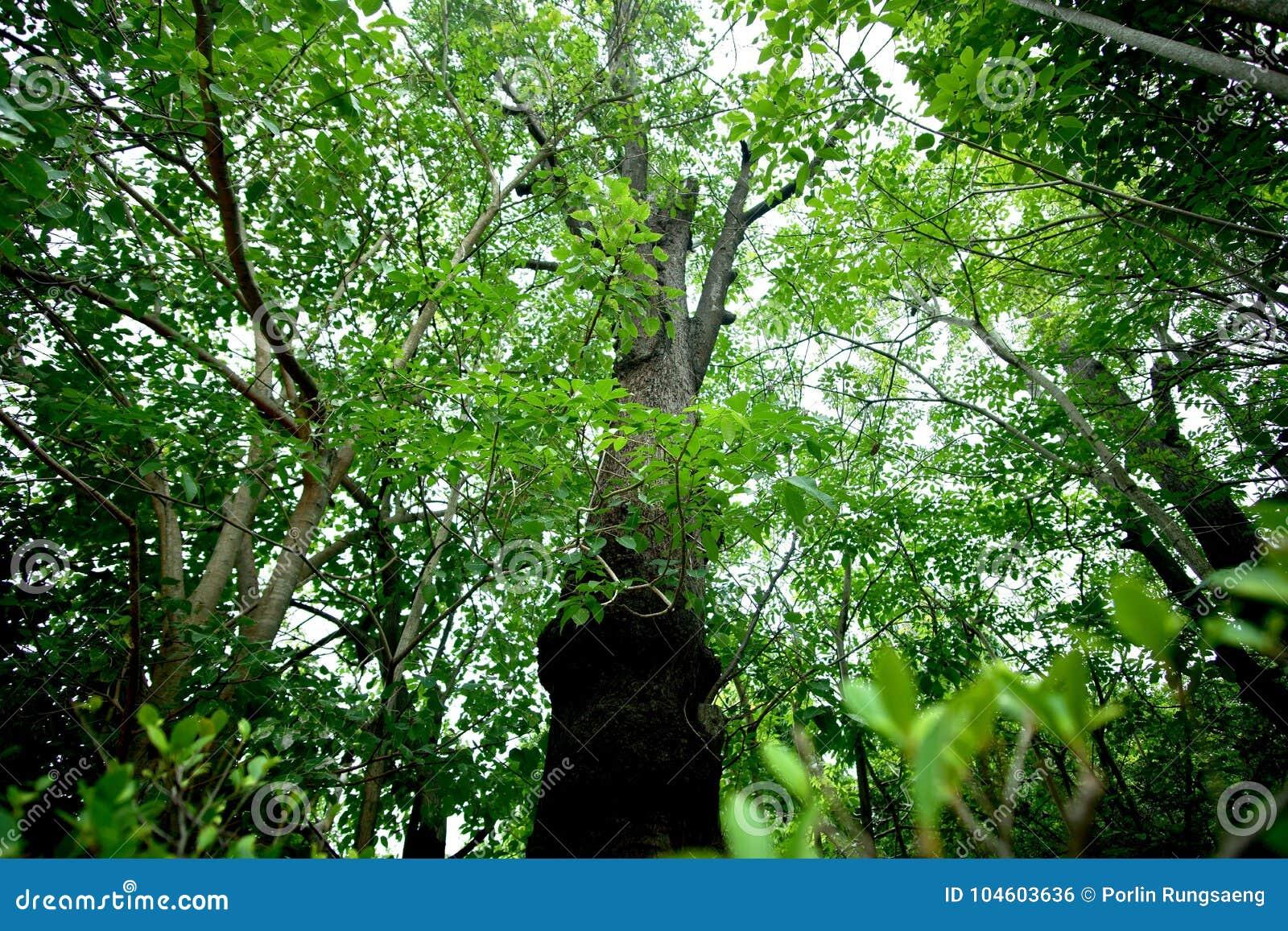 Puissance de forêt