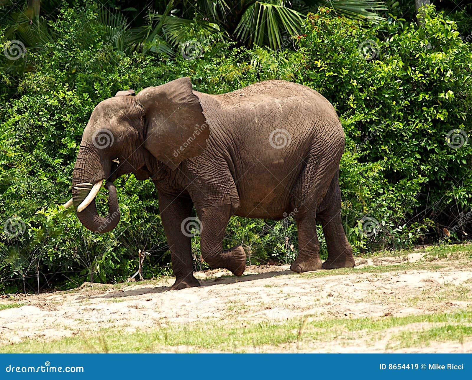 Puissant puissant d éléphant
