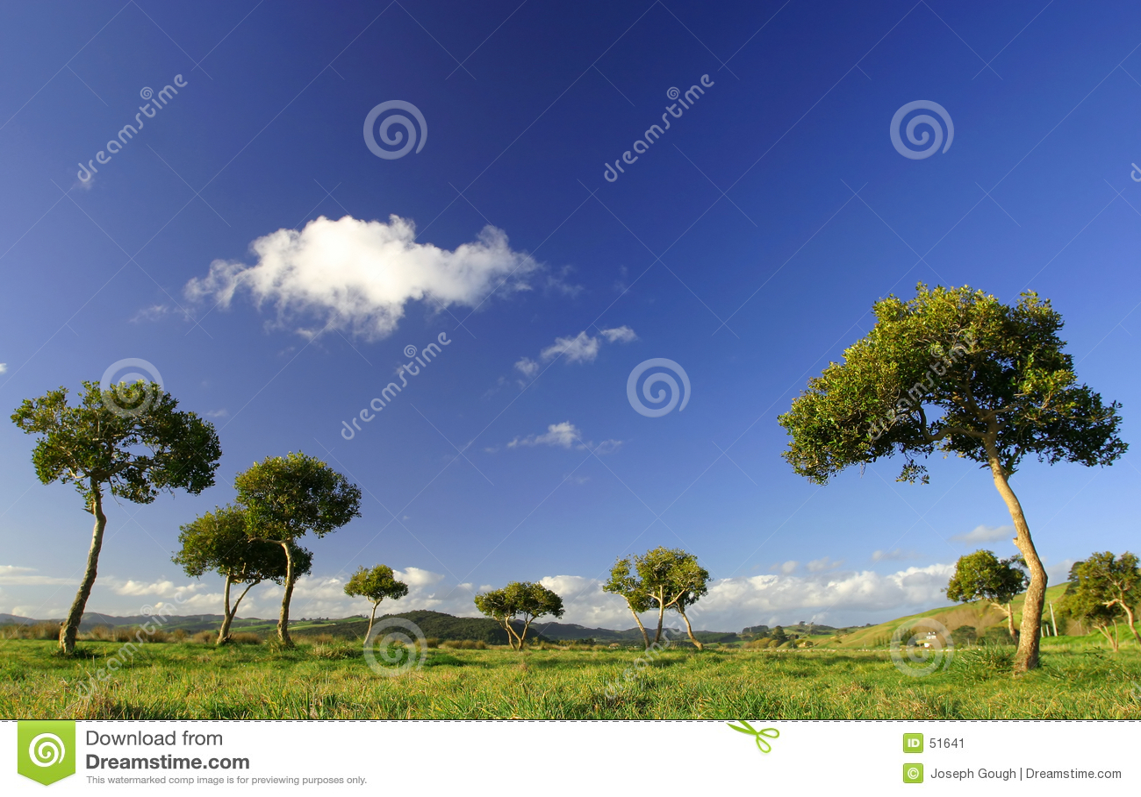 Pukekohe drzewa