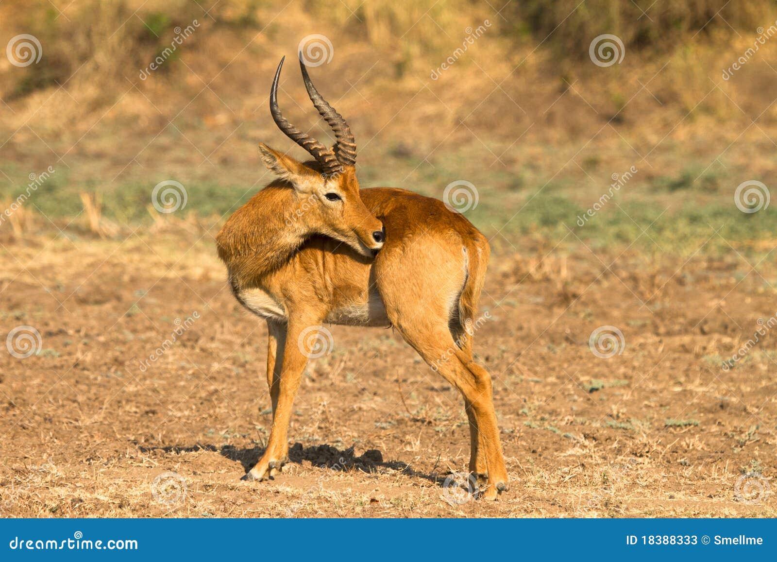 African Antelope Safari