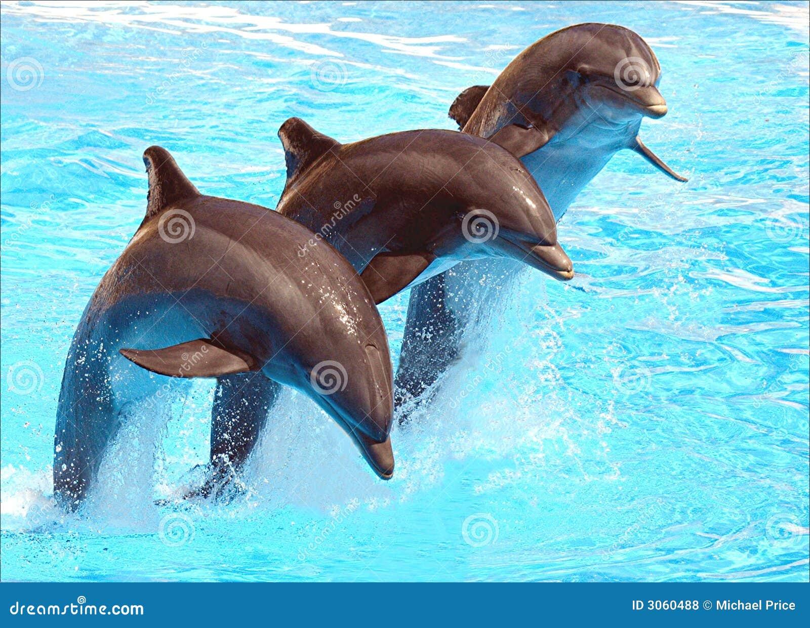 Pulando golfinhos