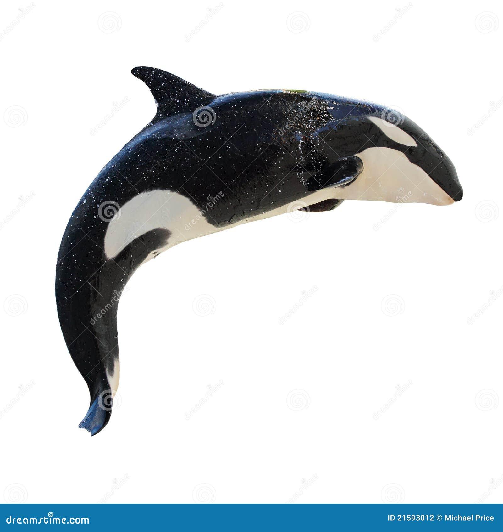 Pulando KillerWhale, orca do Orcinus