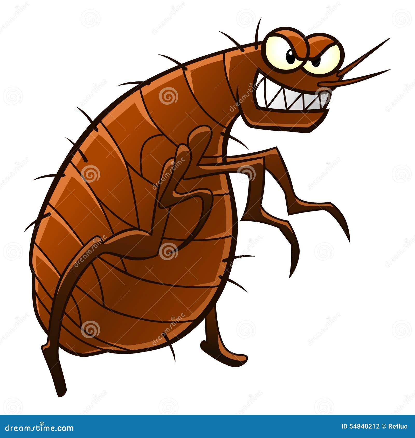 Resultado de imagem para fotografias de pulgas