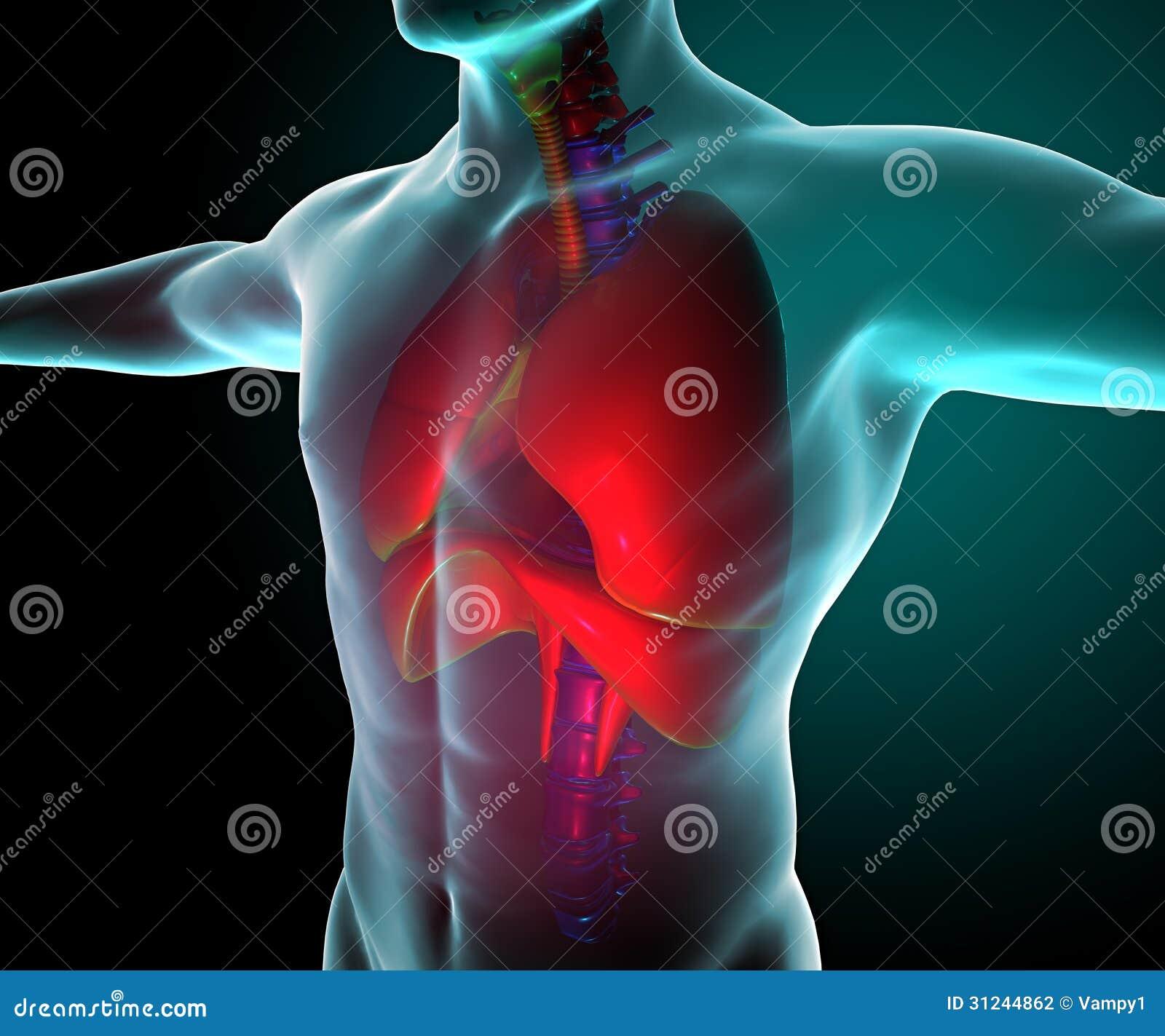 Pulmões vistos em raios X