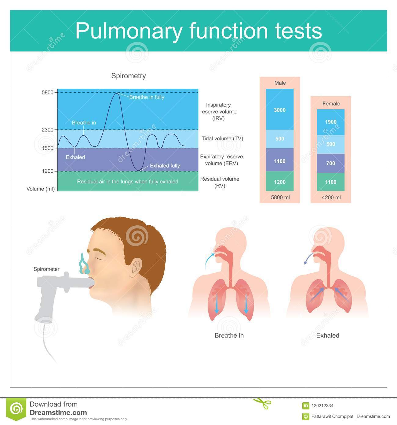 Pulmonary Function Tests Testing For Volume Of Air In The Lungs