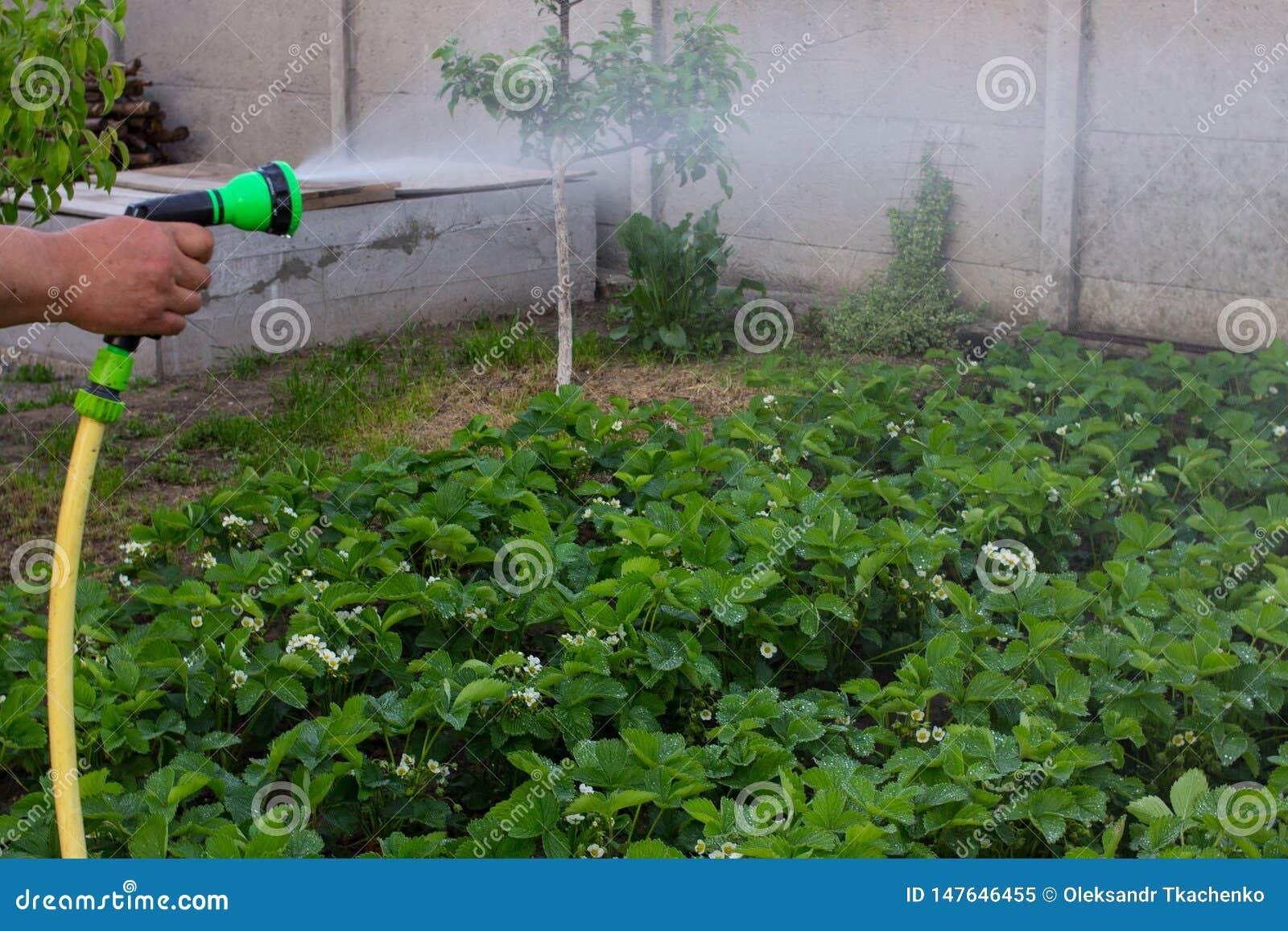 Pulverizador da mangueira da mão da terra arrendada do jardineiro