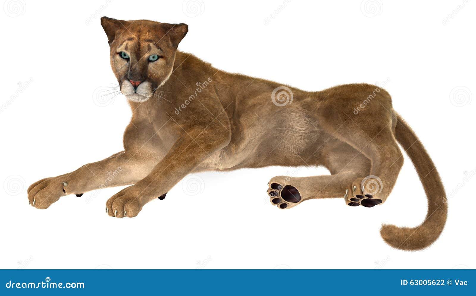 compresión Monarca Lo dudo  Puma del gato grande stock de ilustración. Ilustración de puma - 63005622