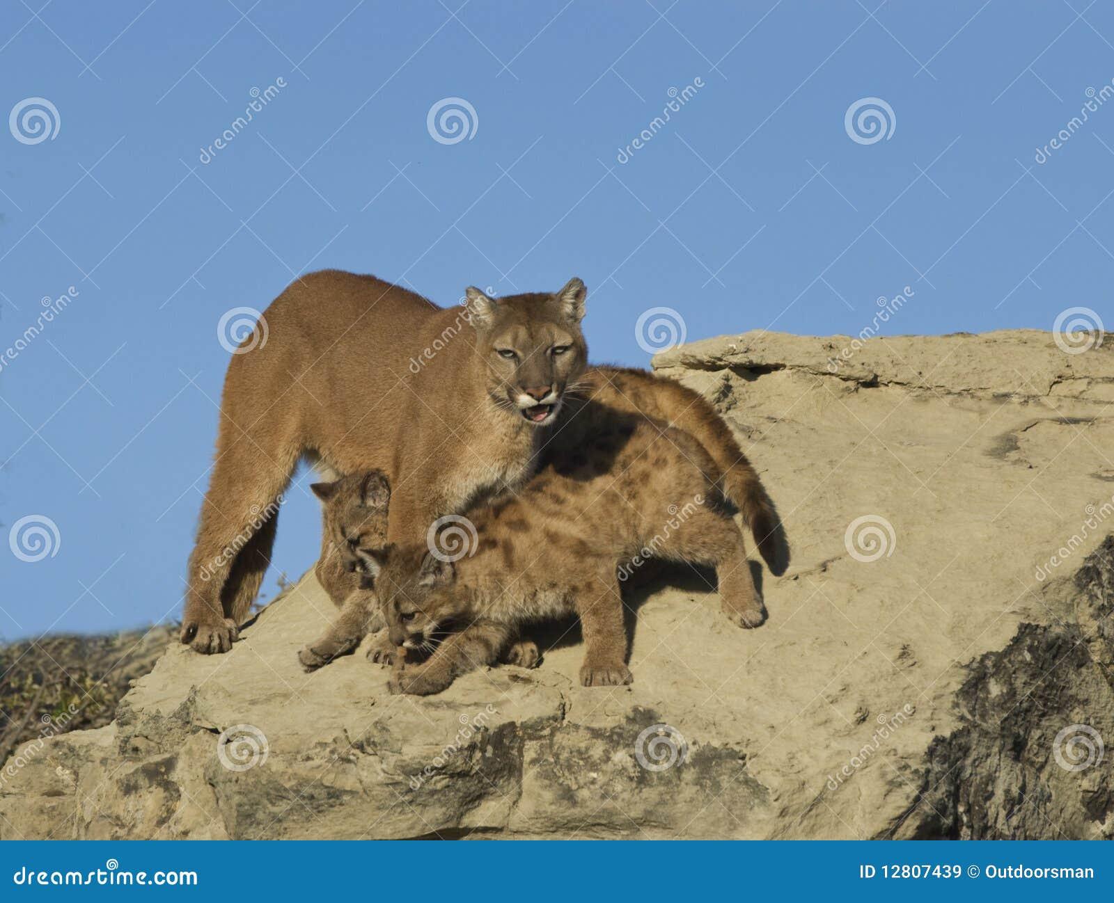 Puma et kits