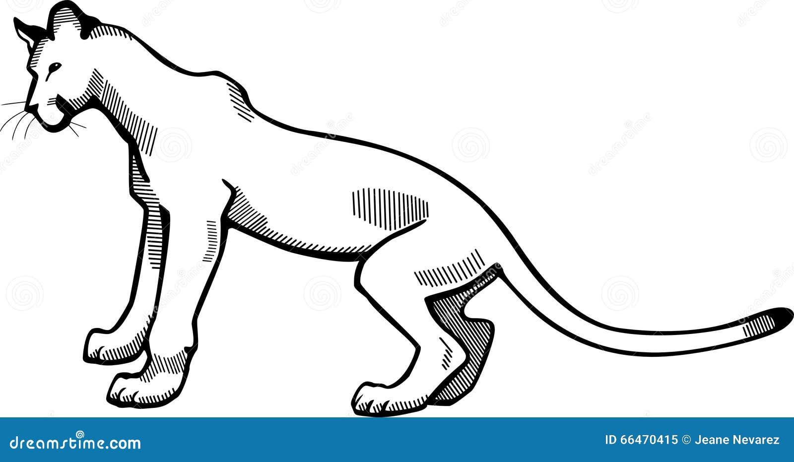 Cougar Face Line Drawing : Puma stock vector image of black mountain predator