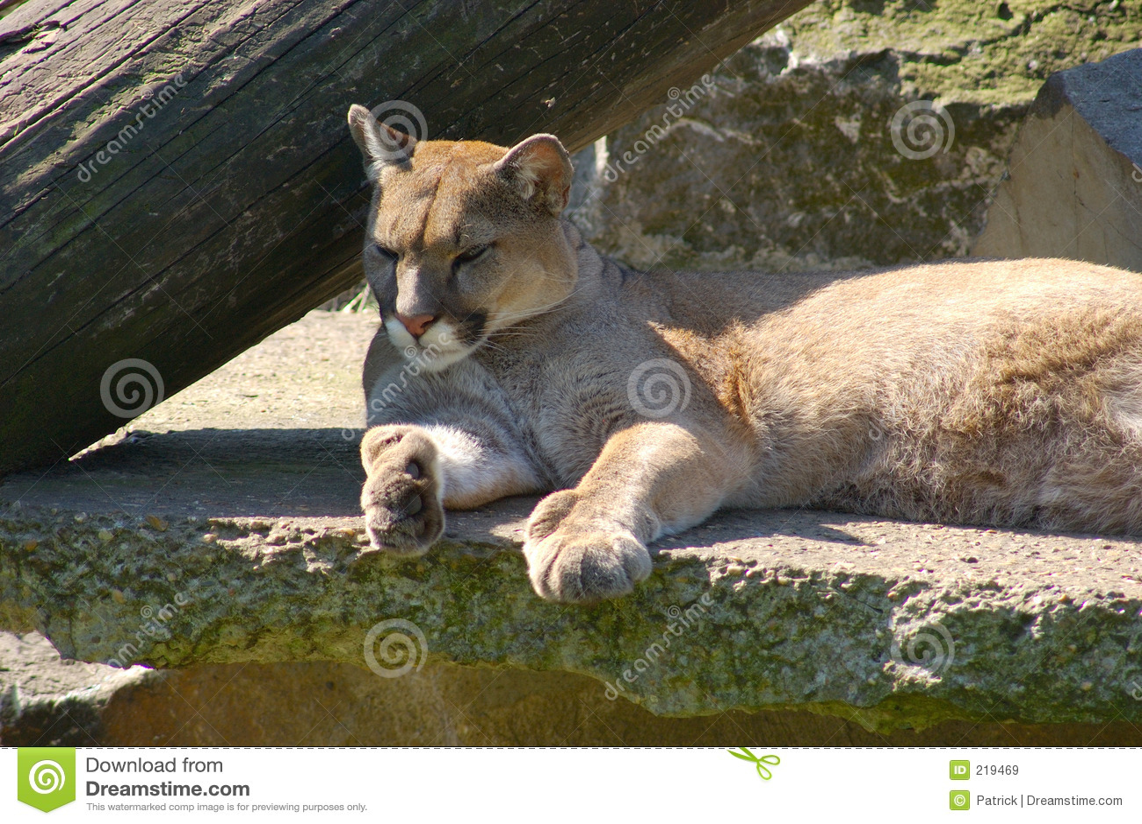 Puma, puma.