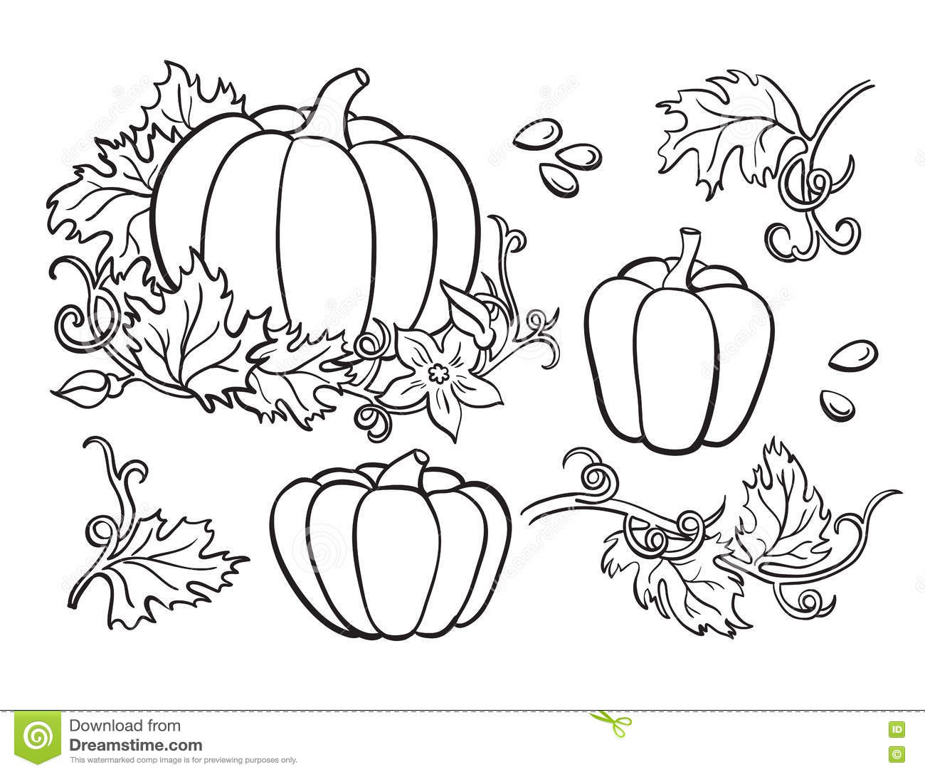 Pumpkin drawing set. Isolated outline vegetable, plant,