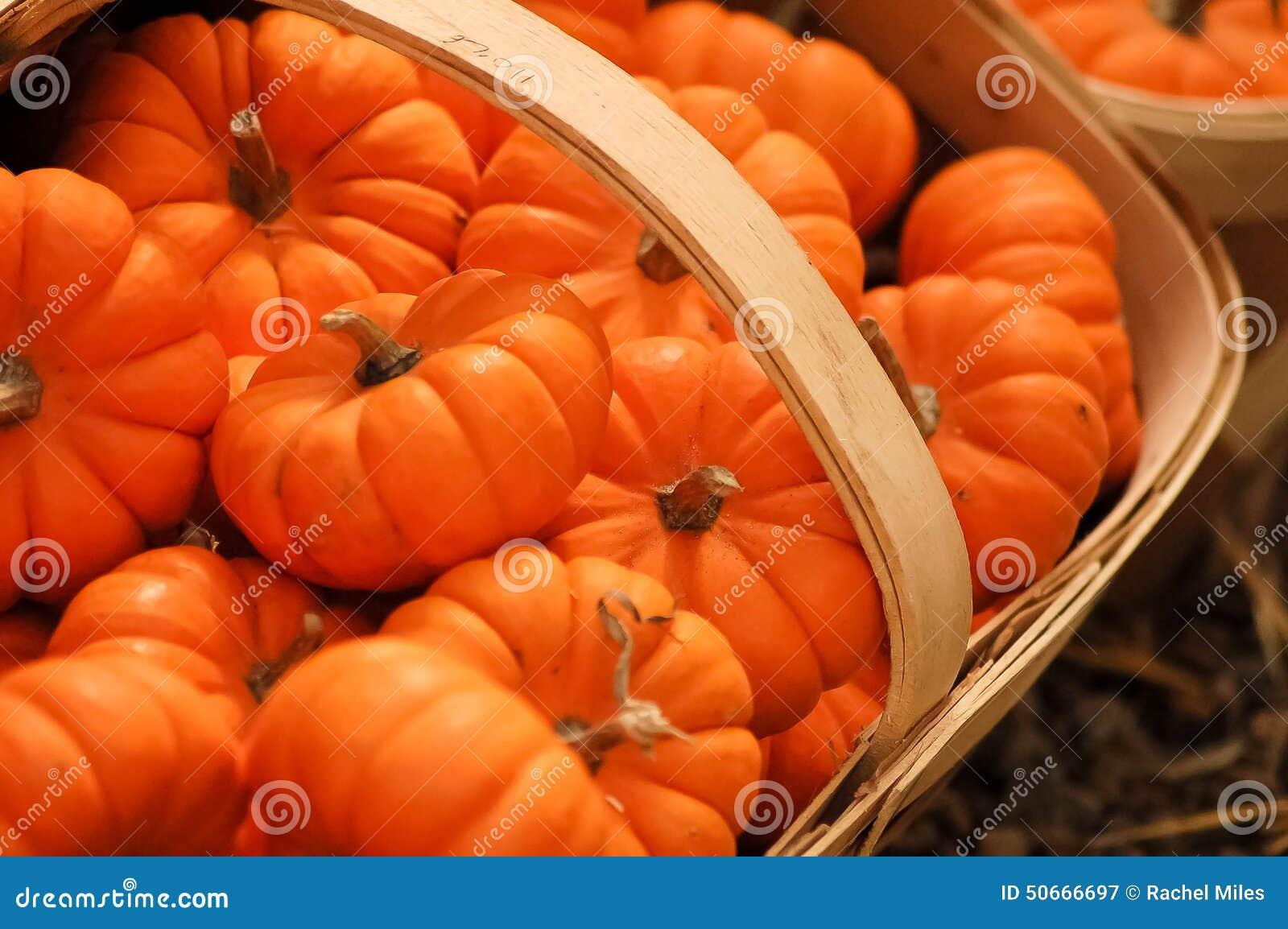 Pumpkin fall photography