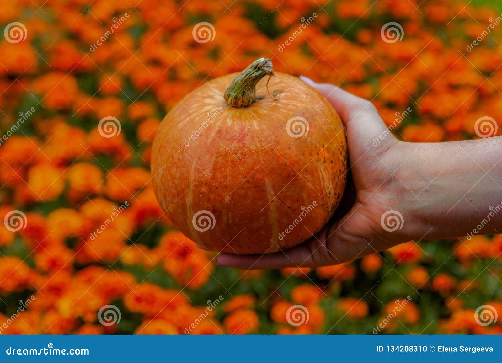 Pumpkin in hands