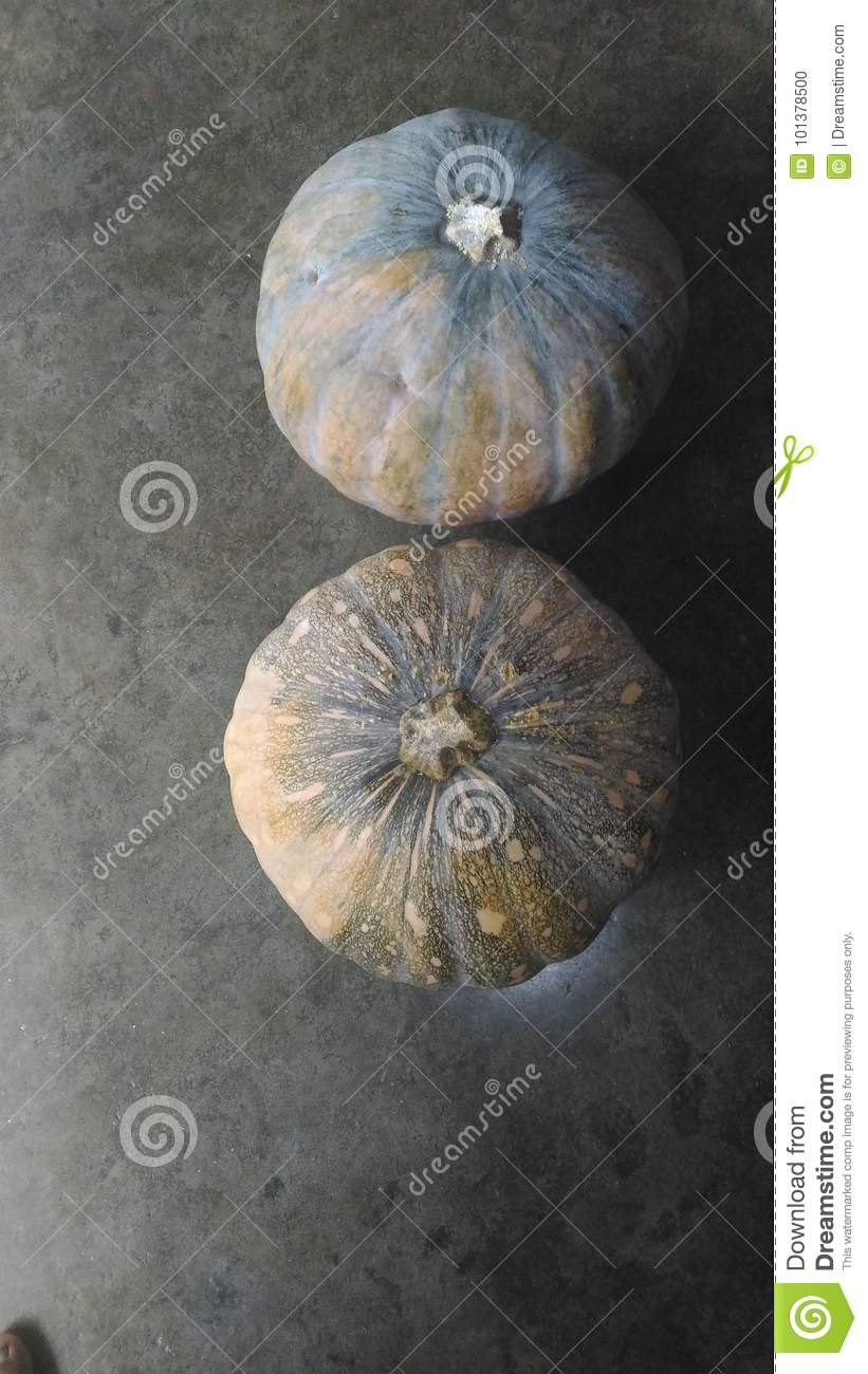 Pumpkin A Kind Of Monsoon Vegetable Stock Photo Image Of Grown