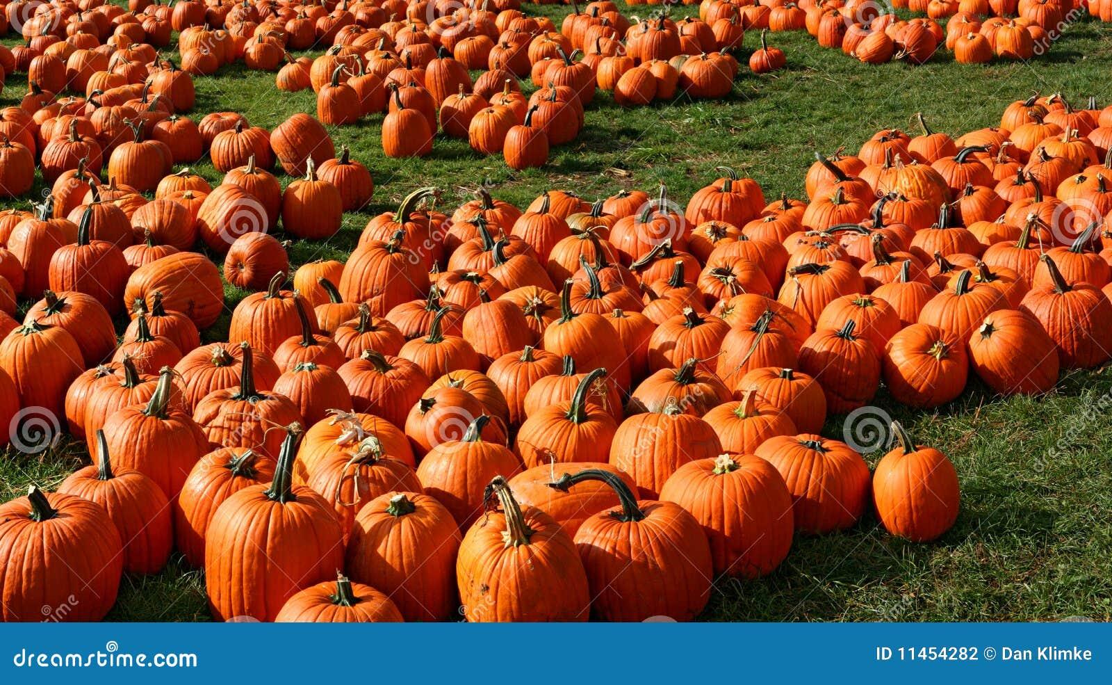 Pumpkin Patch Stock Photo. Image Of Grass, Fruit, Carve