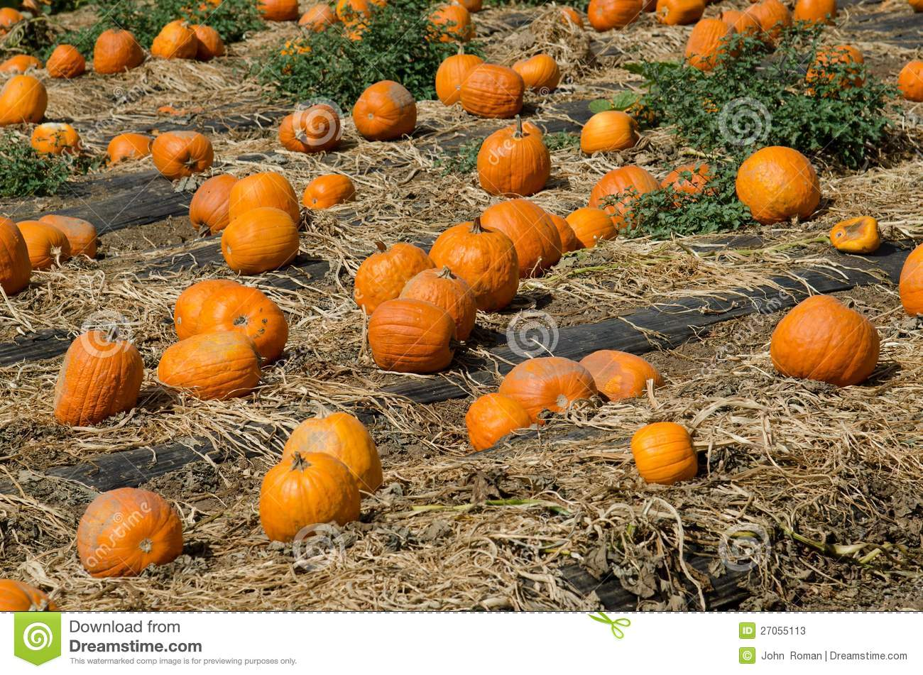 pumpkin patch a strategic management plan Pumpkin patch: a strategic management plan essay 2736 words | 11 pages zealand, australia, the united kingdom and united states it is not easy for pumpkin patch to.