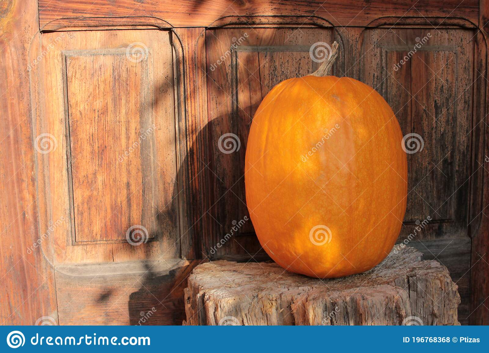 Pumpkin On The Porch On Wooden Door Background Halloween Outdoor Decor Stock Photo Image Of Bright Colorful 196768368