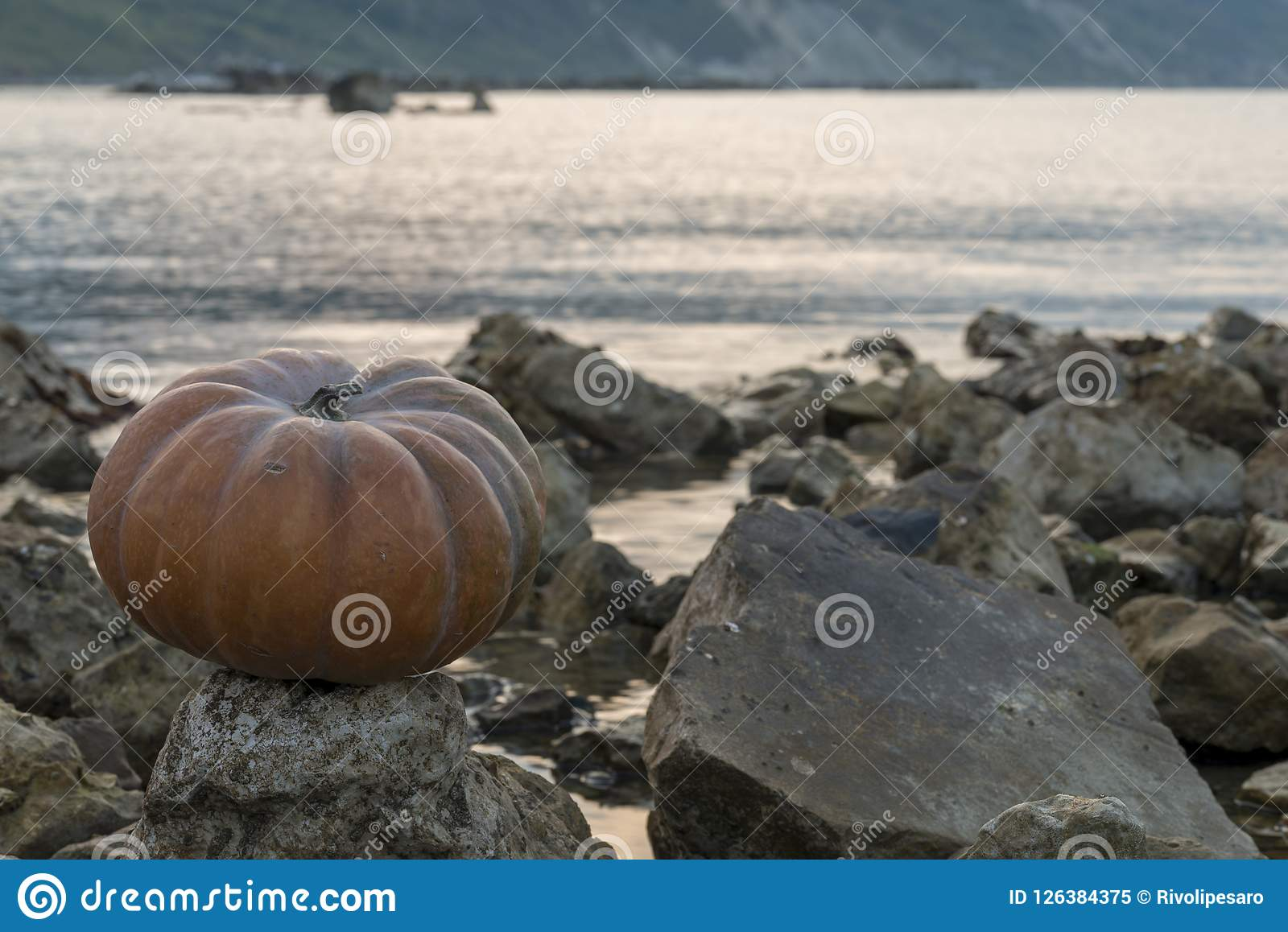 pumpkin on the rock at sunset stock image - image of blue, rock