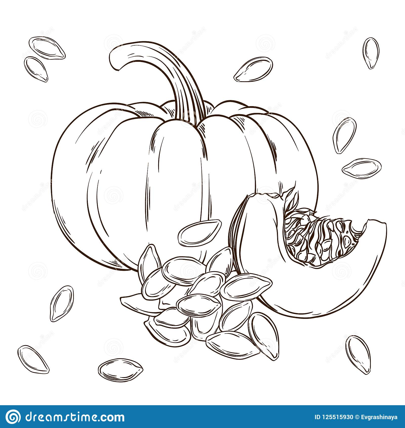 Pumpkin And Seeds Realistic Isolated Vector Illustration Of Food