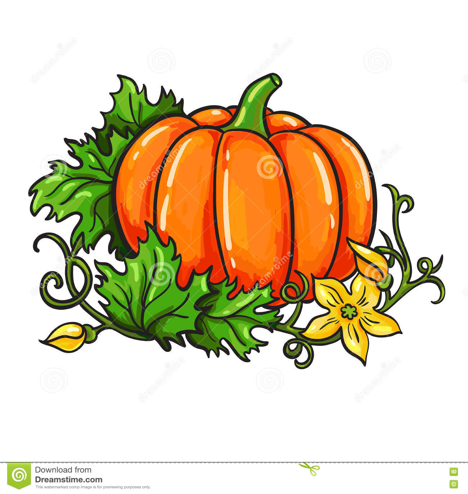 Pumpkin vector drawing. cartoon vegetable