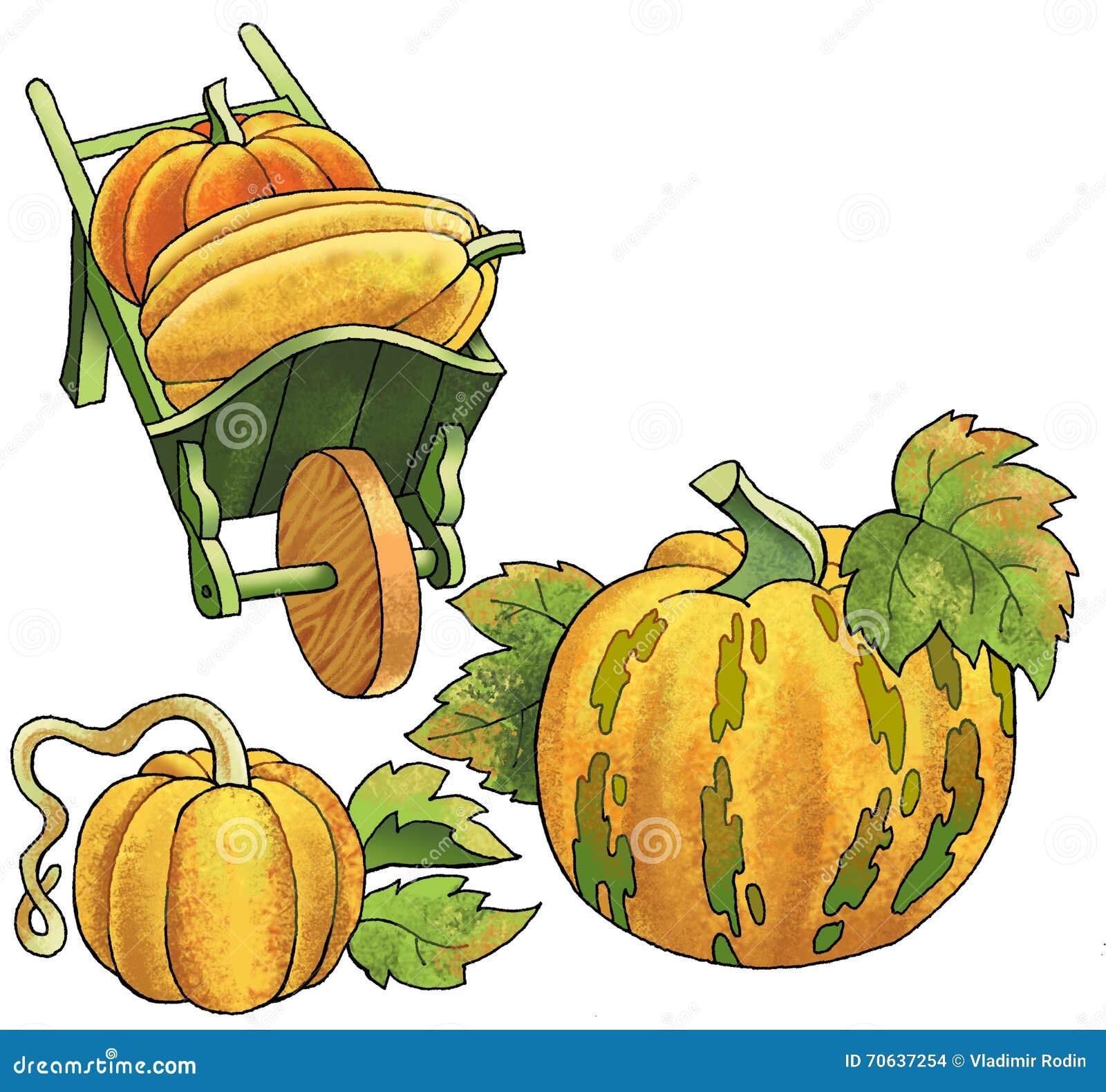 Pumpkin Vegetable Fruit Drawing Plant Wheelbarrow Stock ...