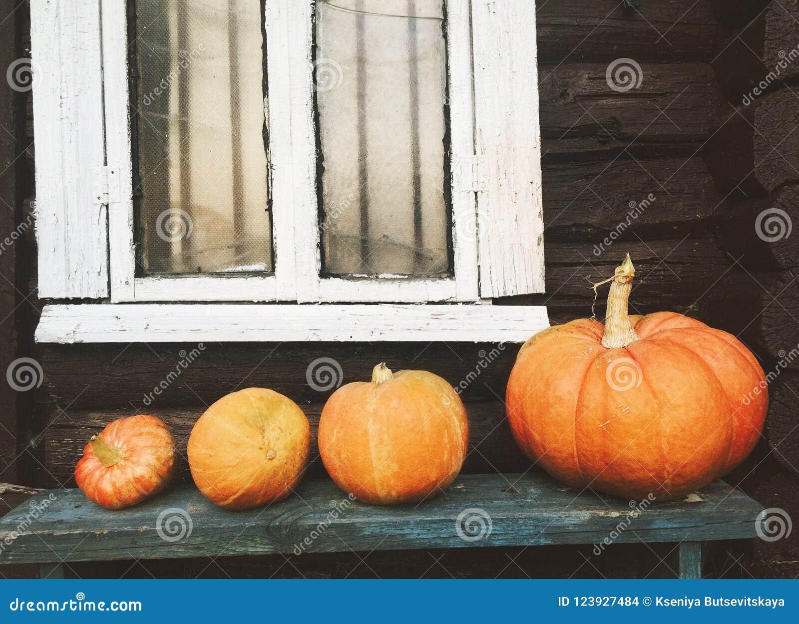 Pumpkins on a bench, autumn