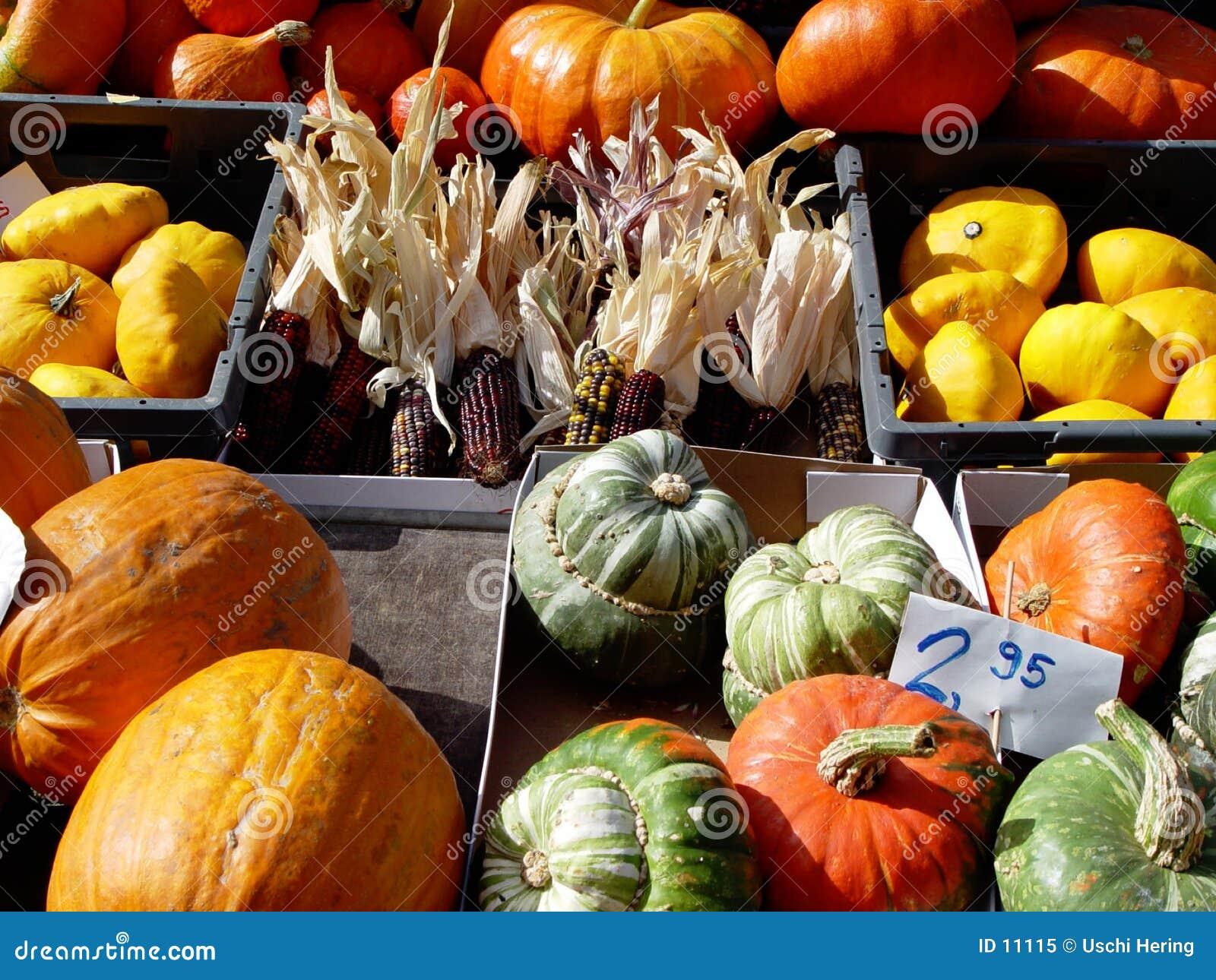 pumpkins + corn
