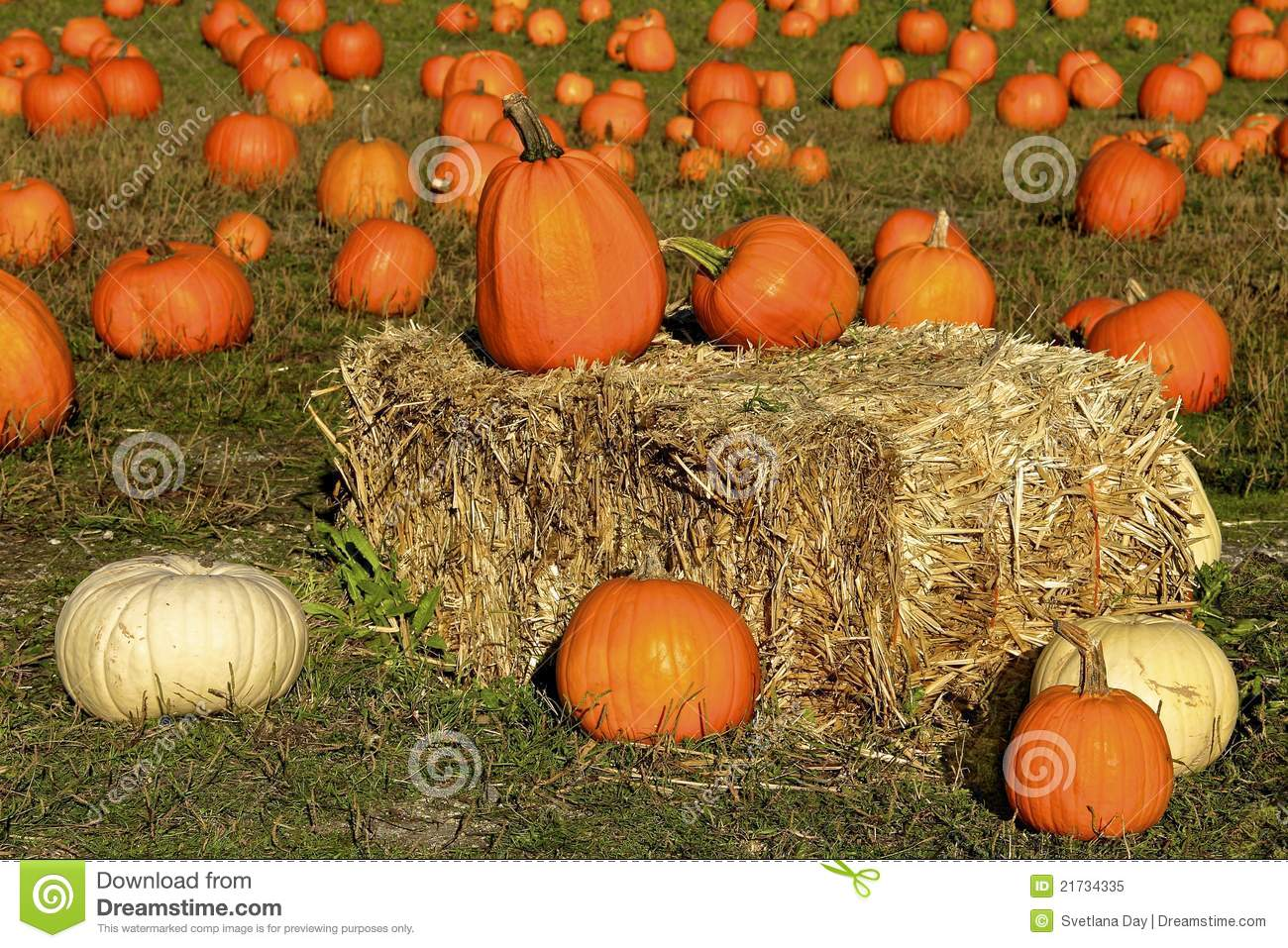 Pumpkins on a hay bale
