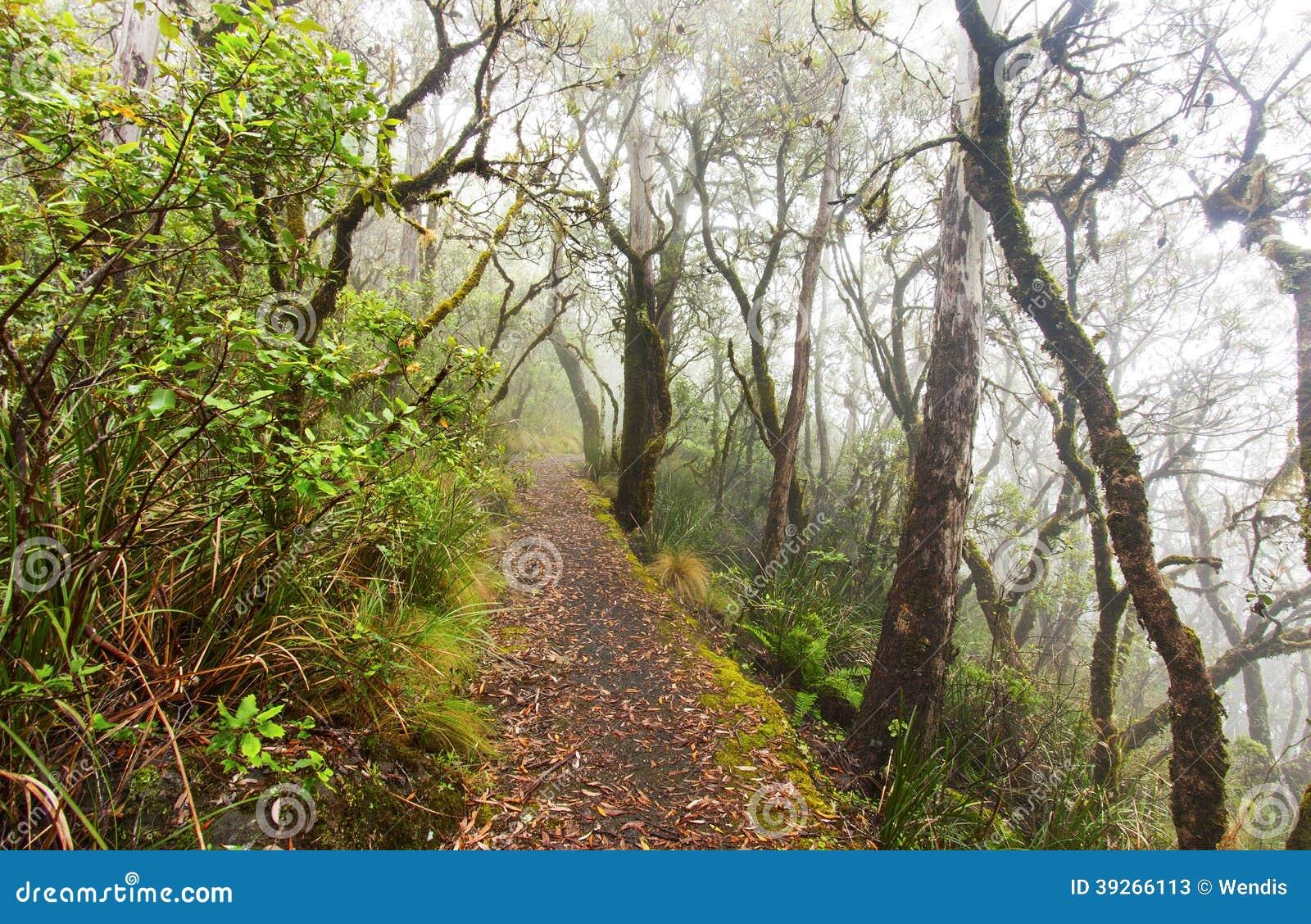 Punkt-Ausblick, Neu-England Nationalpark, AU