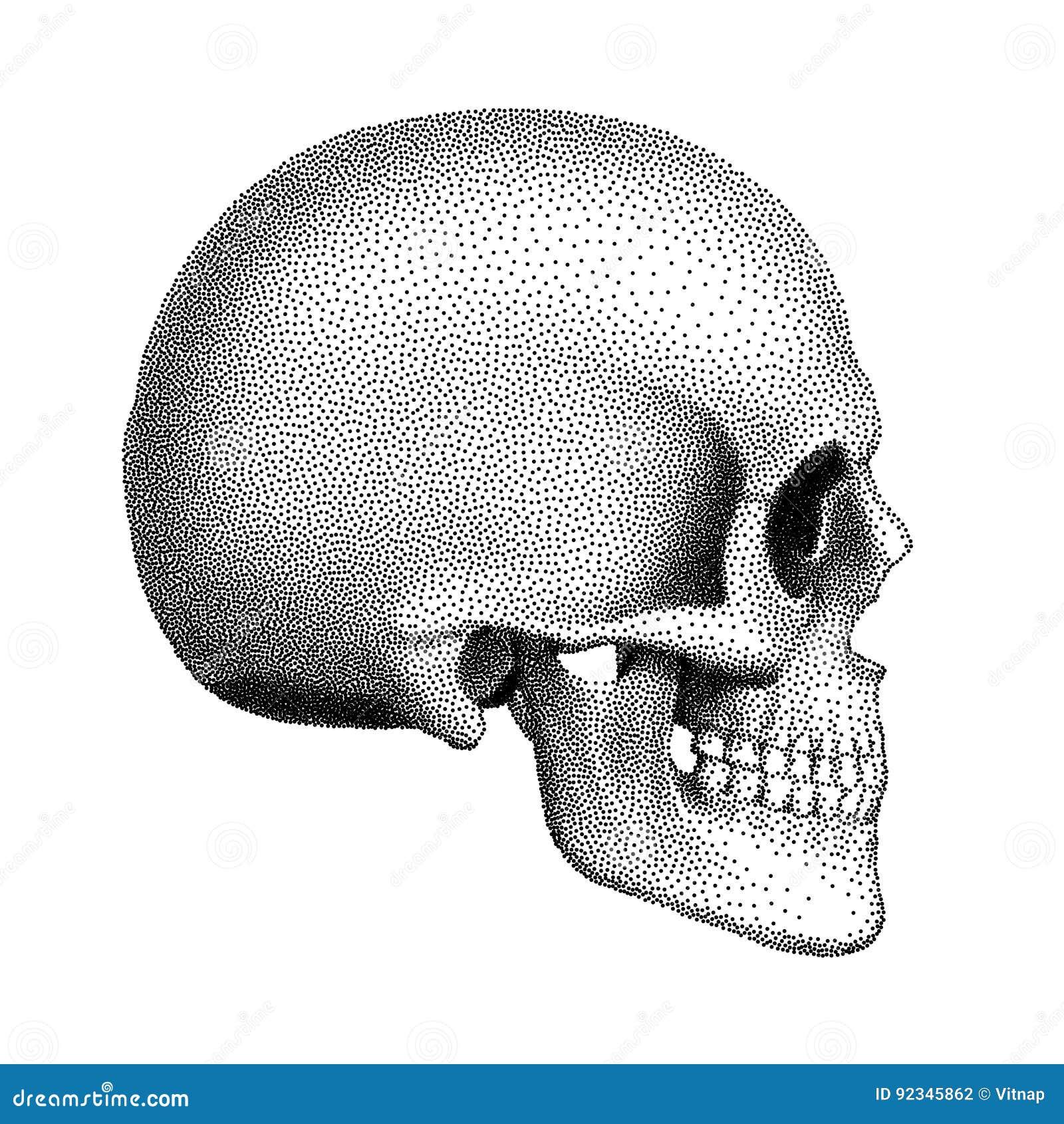Punktierter Menschlicher Schädel Mit Einem Unteren Kiefer ...