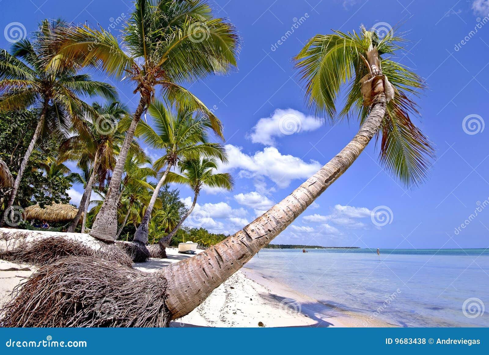 punta cana dominican republic stock photo image 9683438. Black Bedroom Furniture Sets. Home Design Ideas