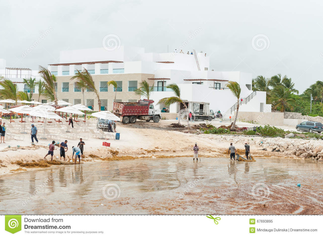 PUNTA CANA, DOMINICAN REPUBLIC - JUNE 18, 2015: Local People Trying Remove Weed From Water In ...