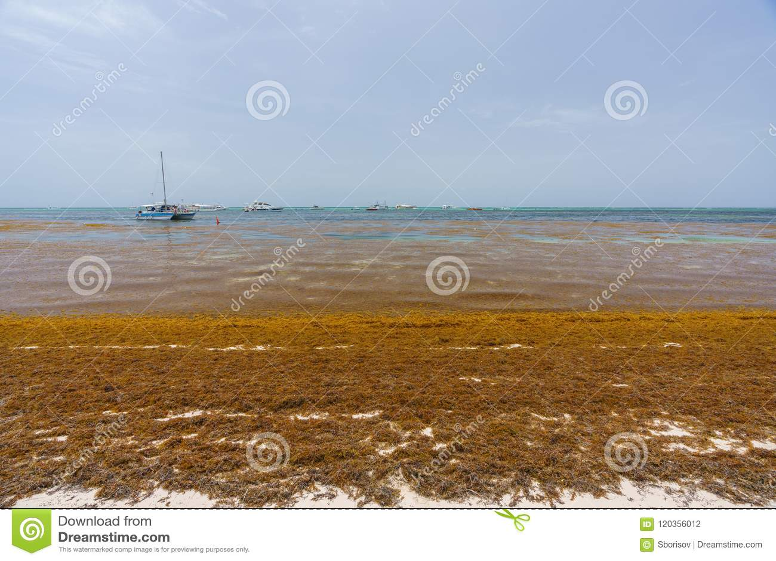 Punta Cana, Dominican Republic - June 24, 2018: Sargassum