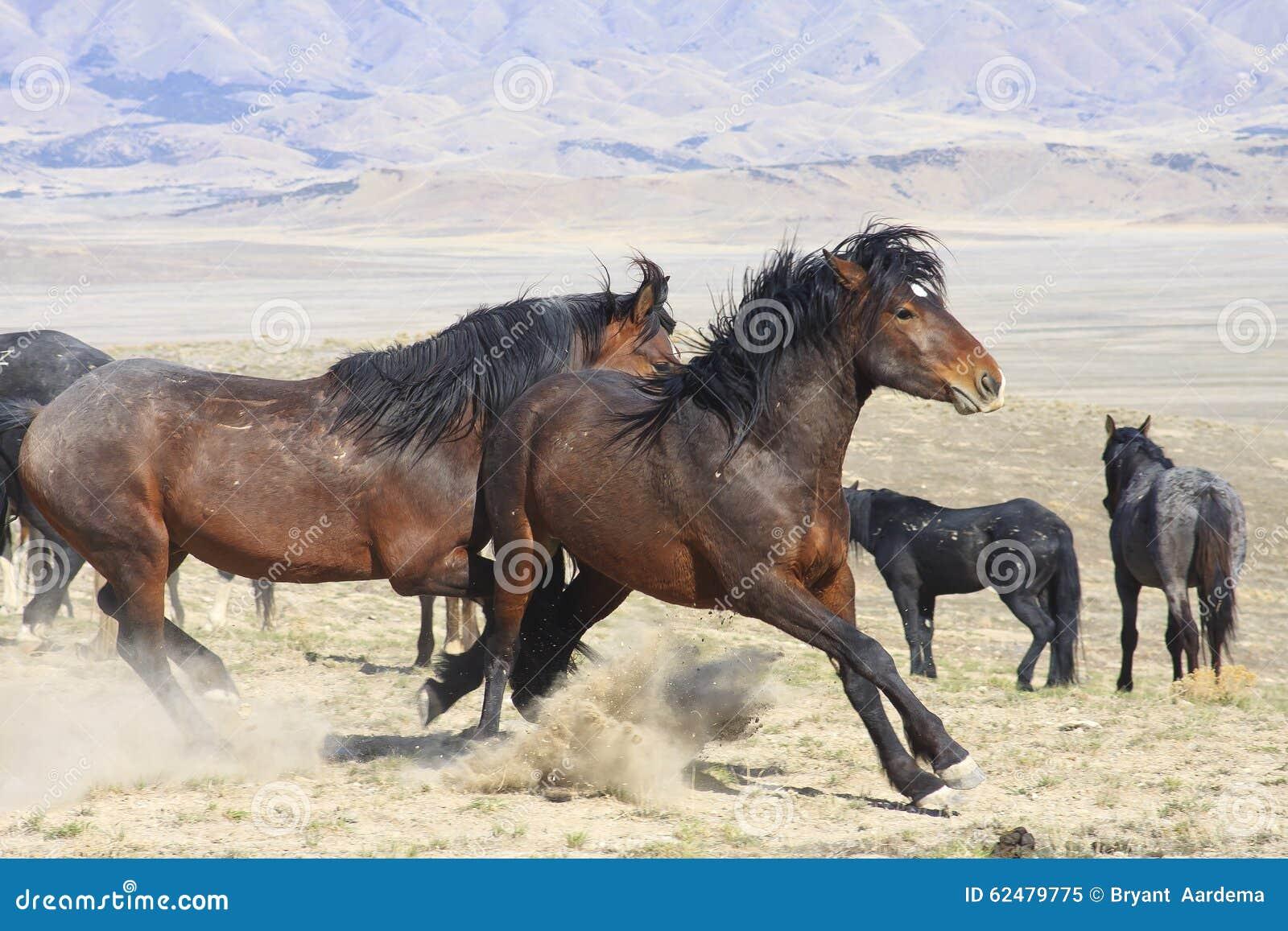Puntal del caballo