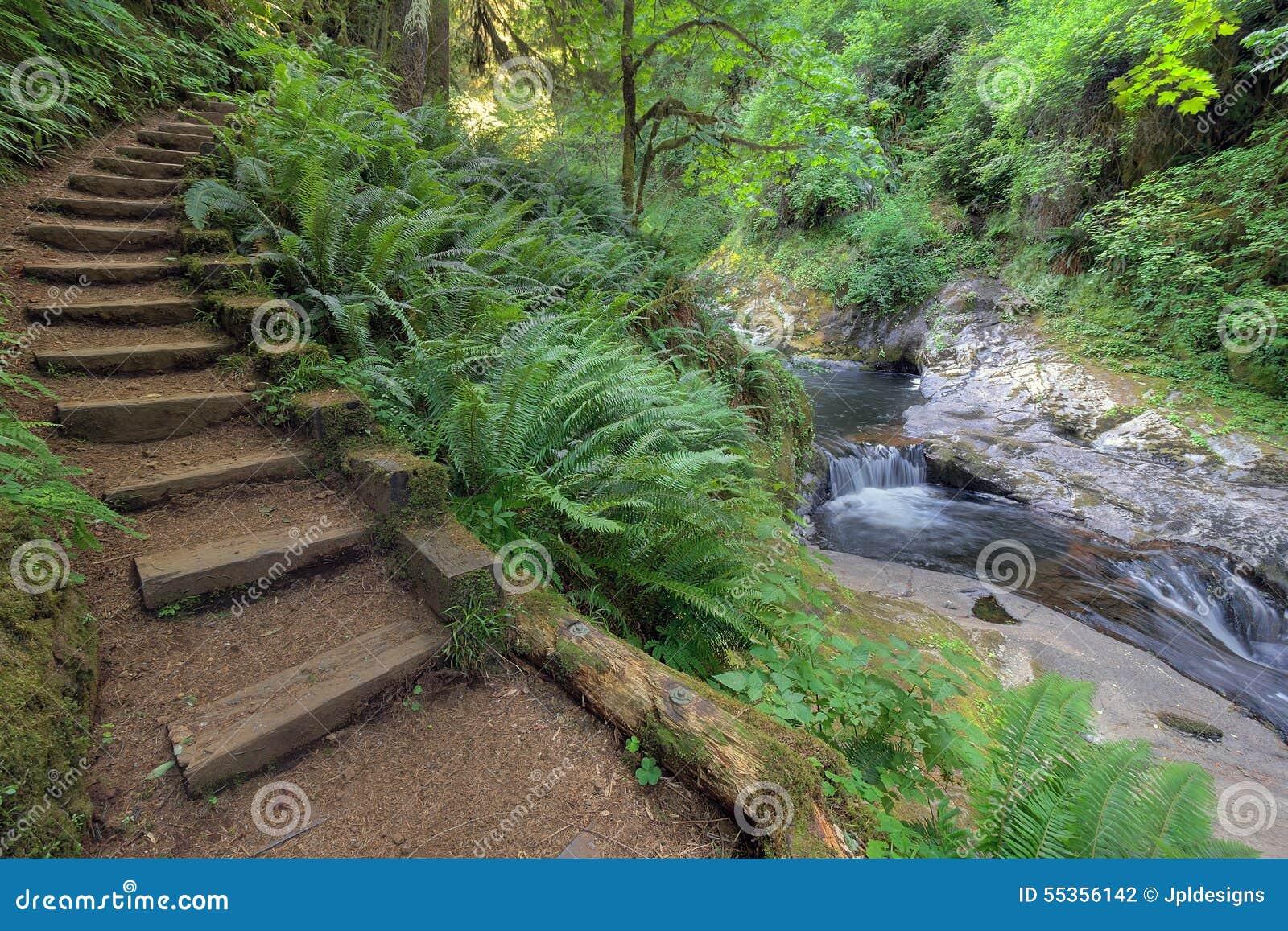 Punti di legno dalla cascata alla traccia dolce di cadute dell insenatura