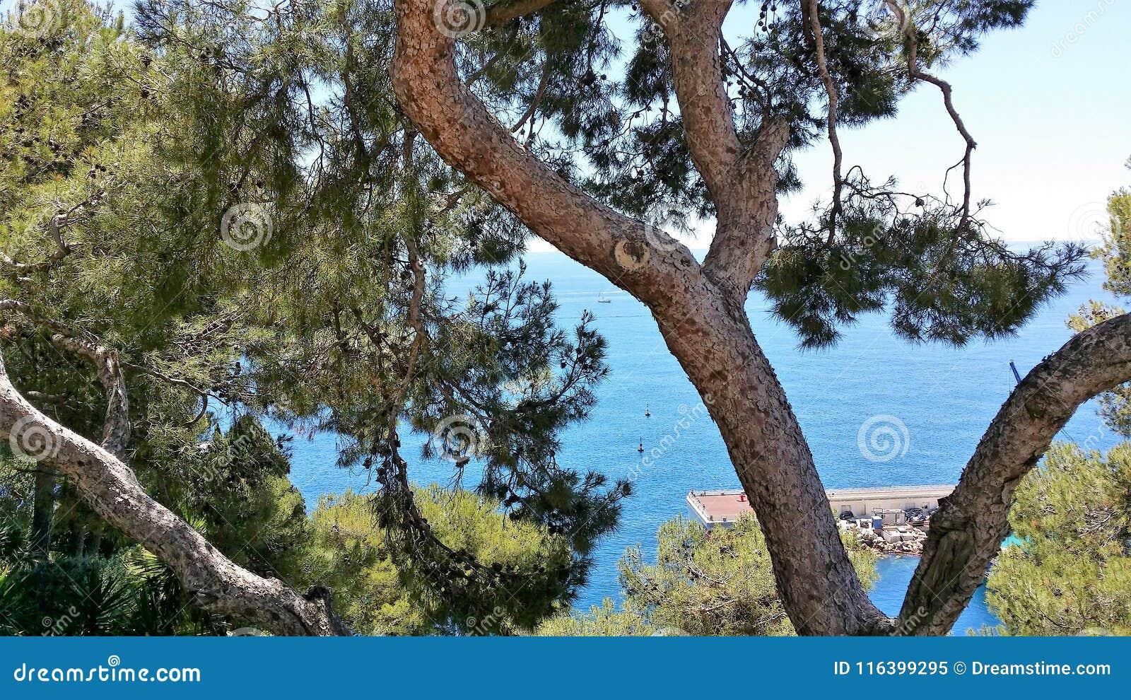 Punti di vista di principe Palace del Monaco