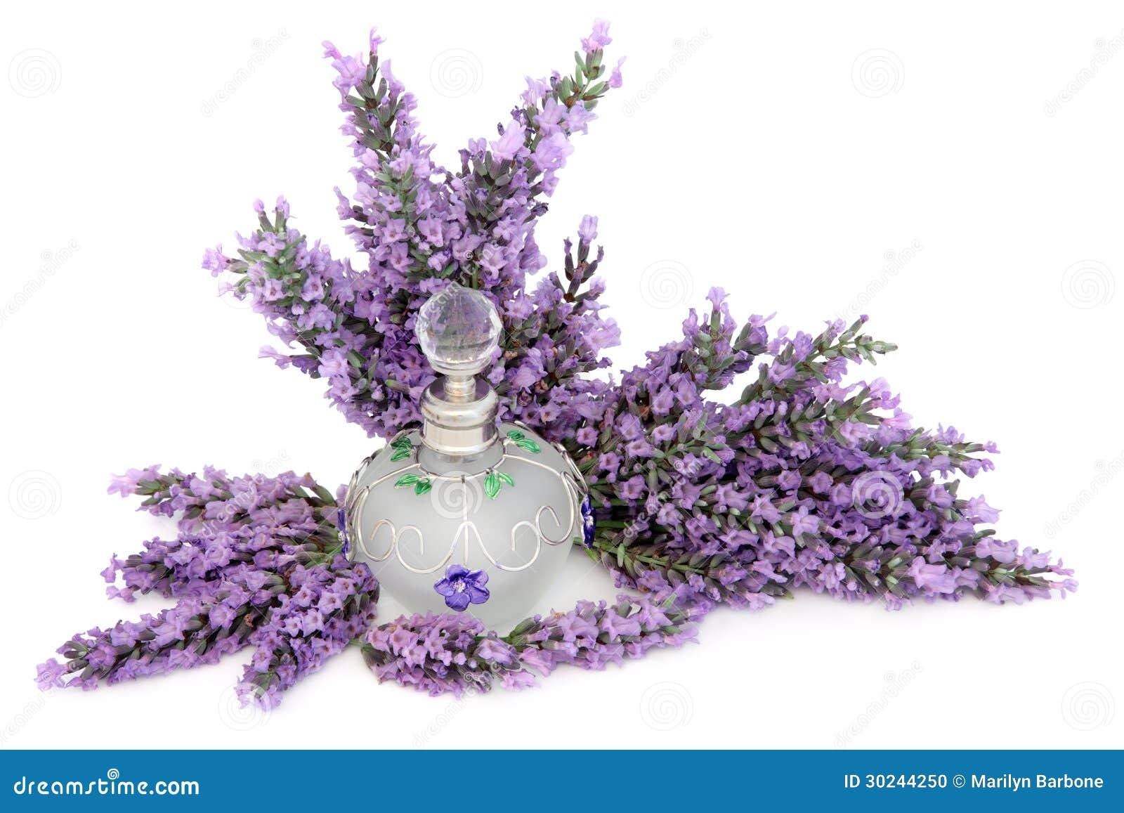 Olor de la flor de la lavanda foto de archivo imagen de for Fotos de lavanda