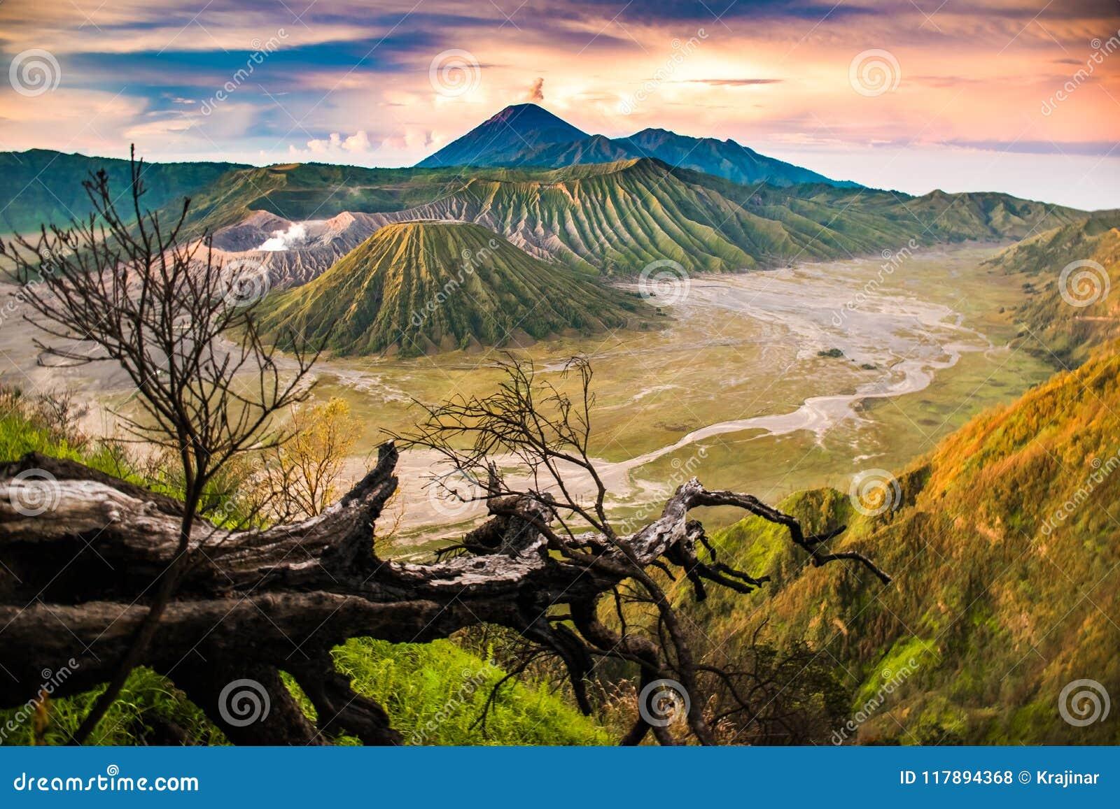 Punto de vista hermoso de la salida del sol con un soporte Bromo, Java Oriental, Indonesia del árbol
